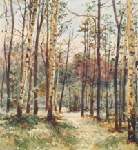Birch grove in the morning light