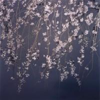 Sakura Search
