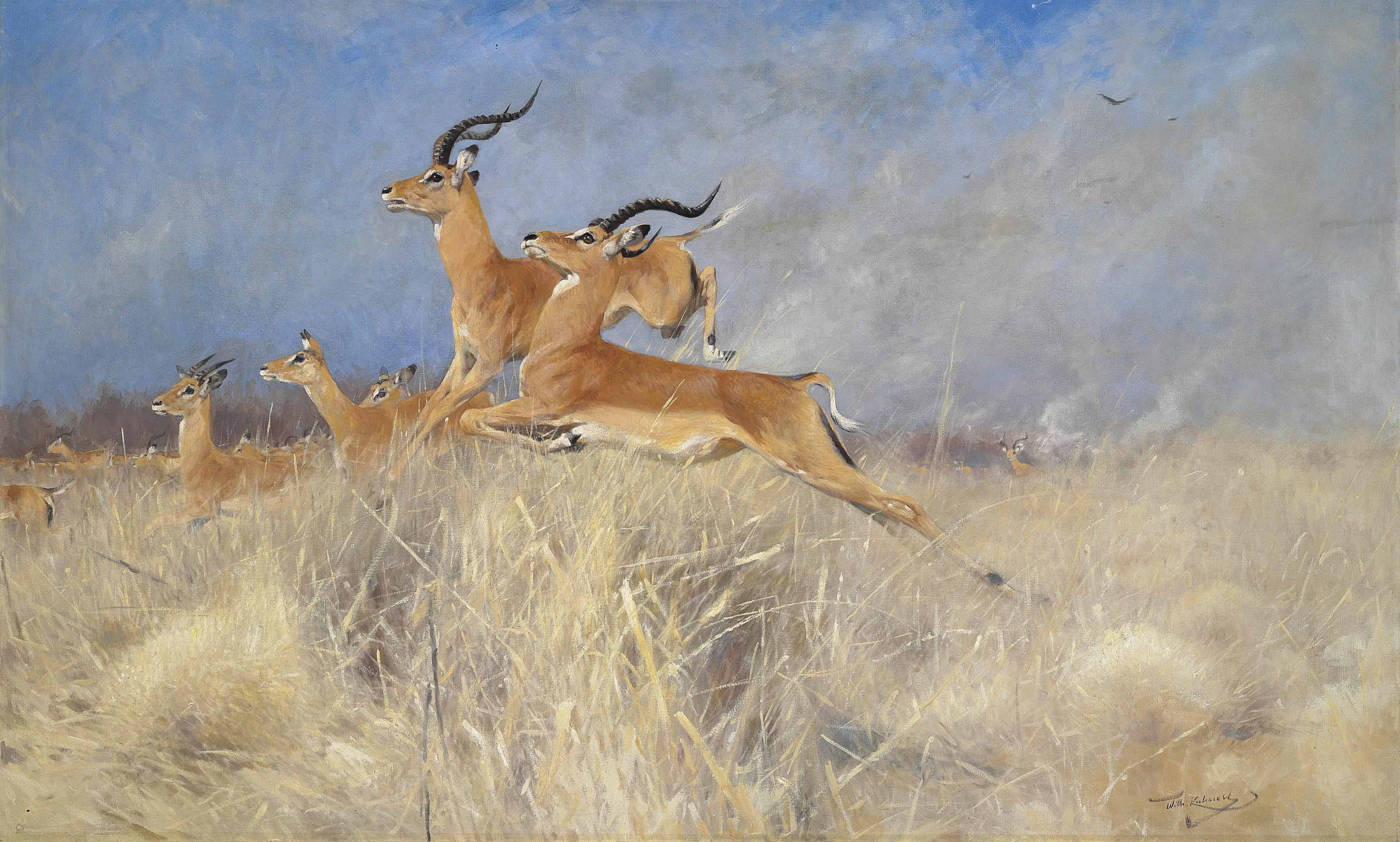 Swalla antelope in flight