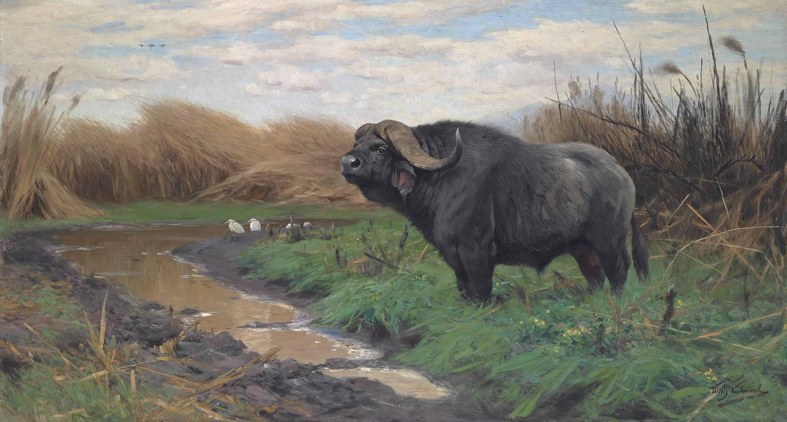 A Buffalo in a marsh