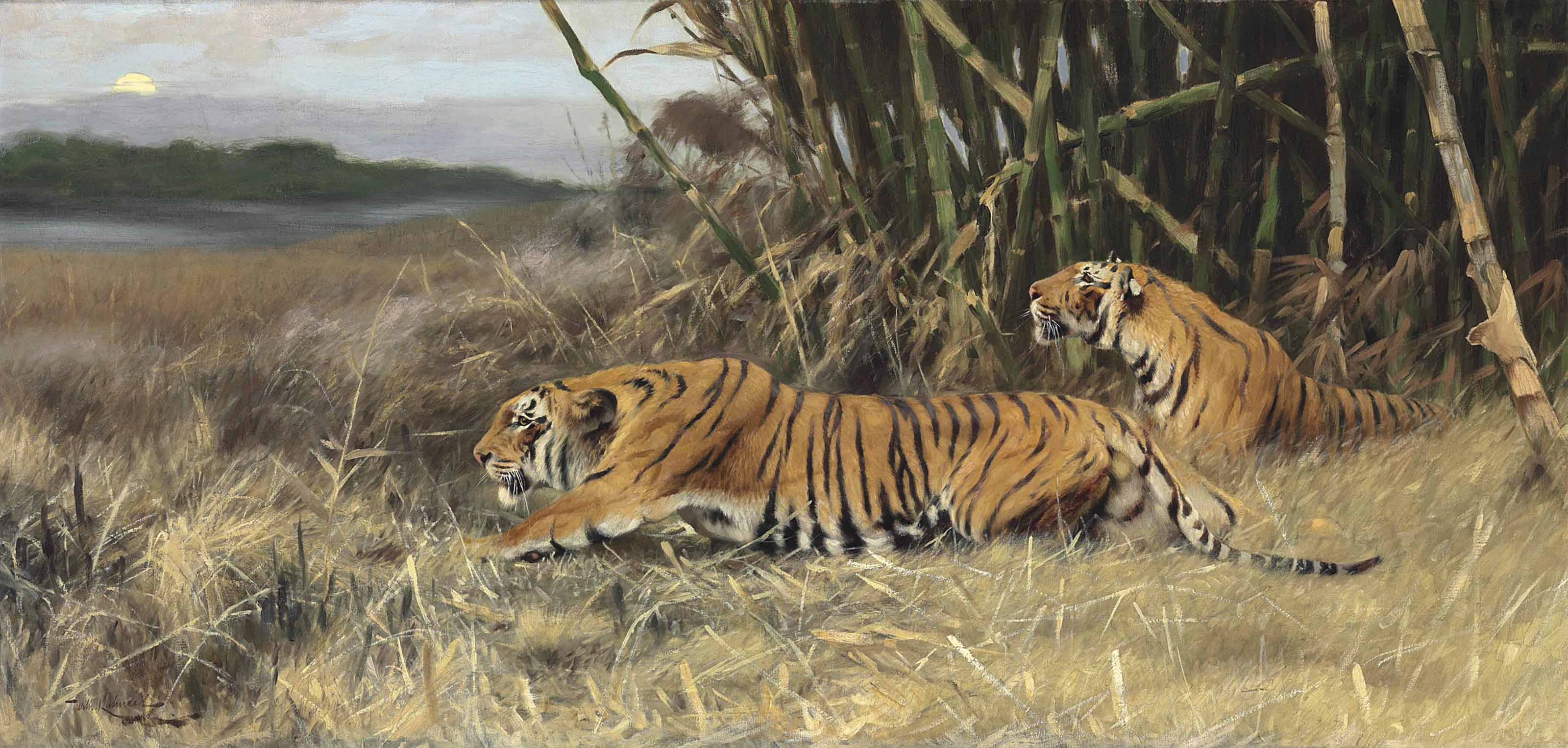 Two stalking tigers