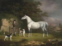A grey hunter with a groom and two hounds in a wooded landscape