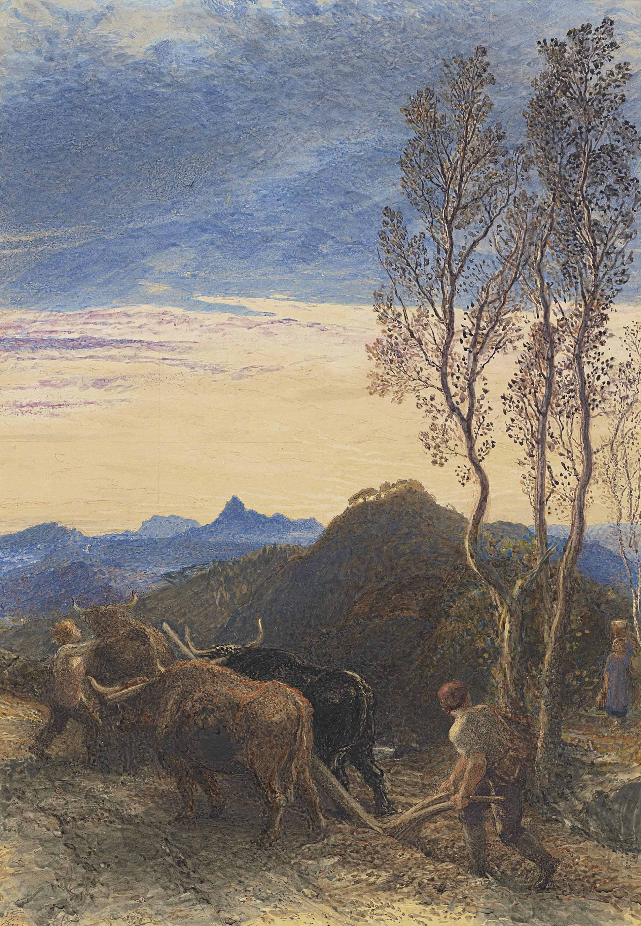 Oxen ploughing at sunset