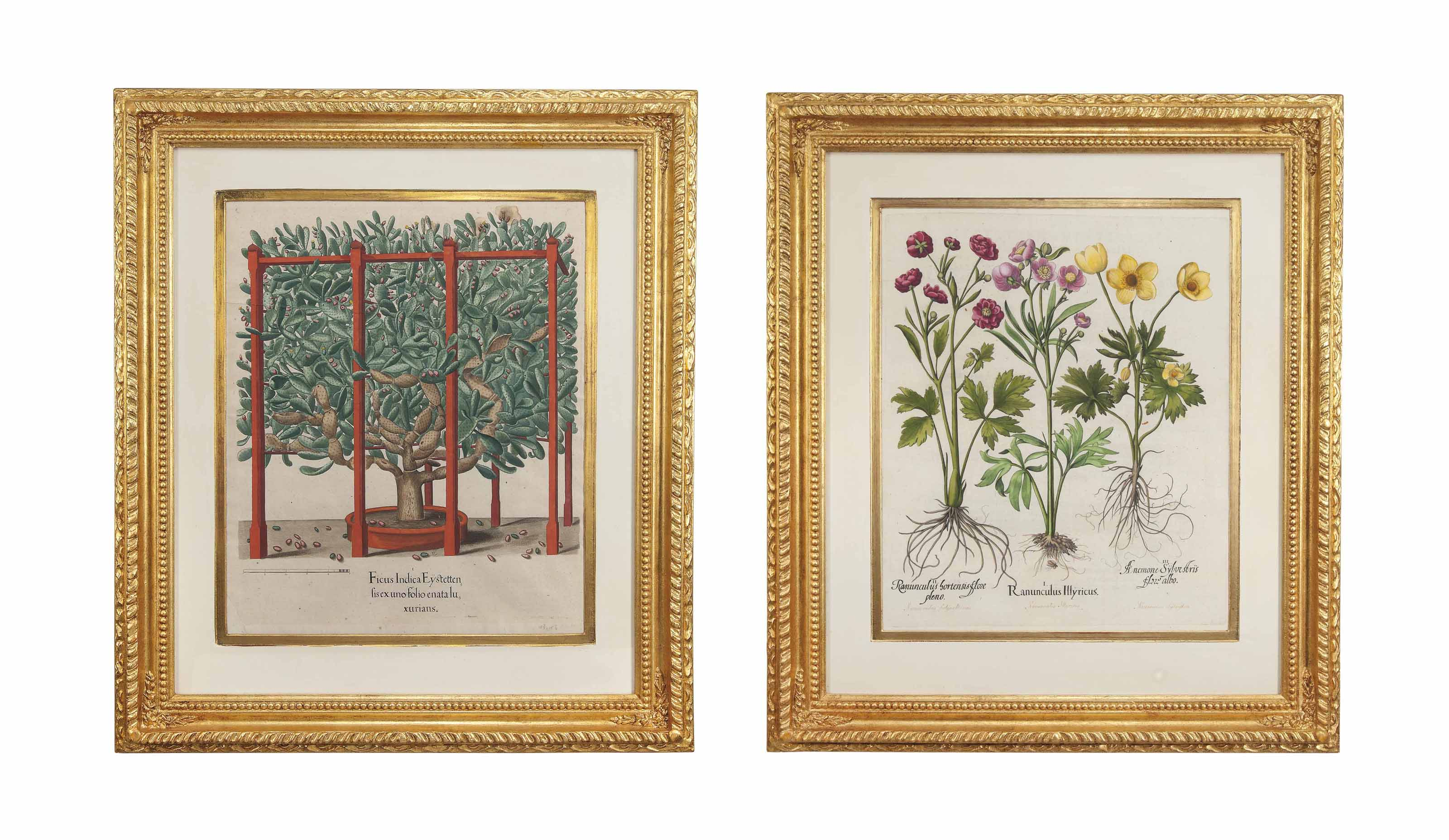 FOUR HAND-COLOURED COPPER-PLATE ENGRAVINGS FROM HORTUS EYSTETTENSIS