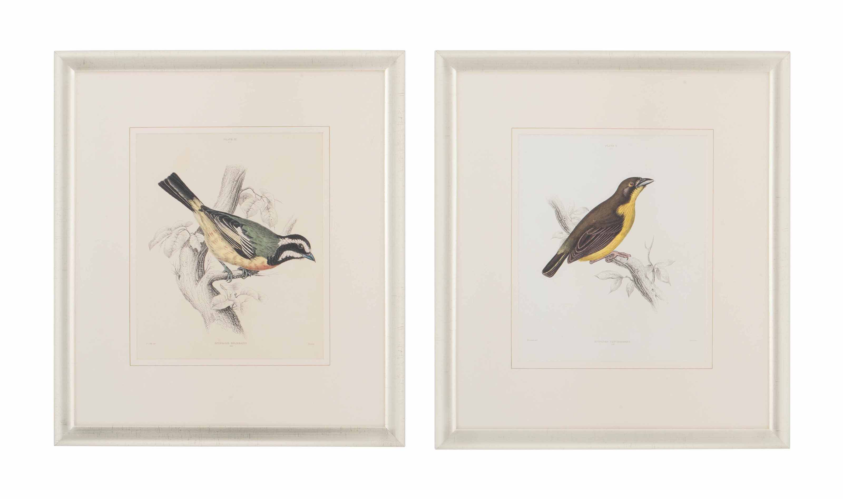EIGHTEEN HAND-COLOURED ENGRAVINGS OF BIRDS
