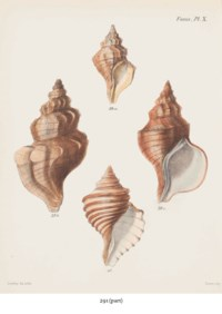 TWELVE HAND-COLOURED LITHOGRAPHS FROM CONCHOLIGIA ICONICA