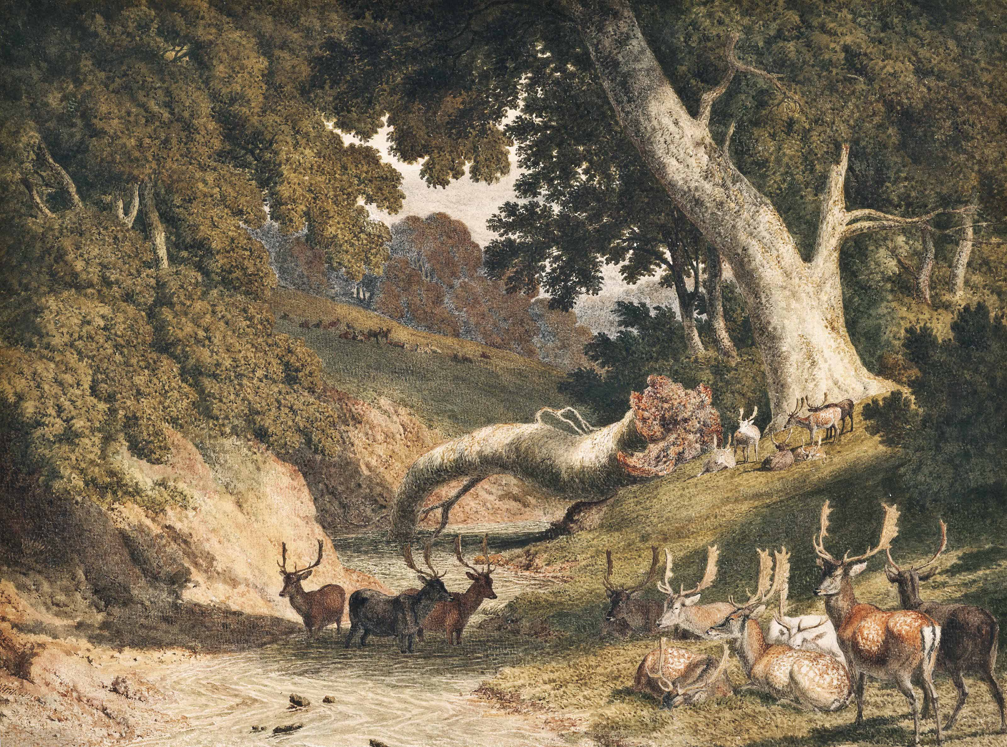 Stags and hinds in a park by a river