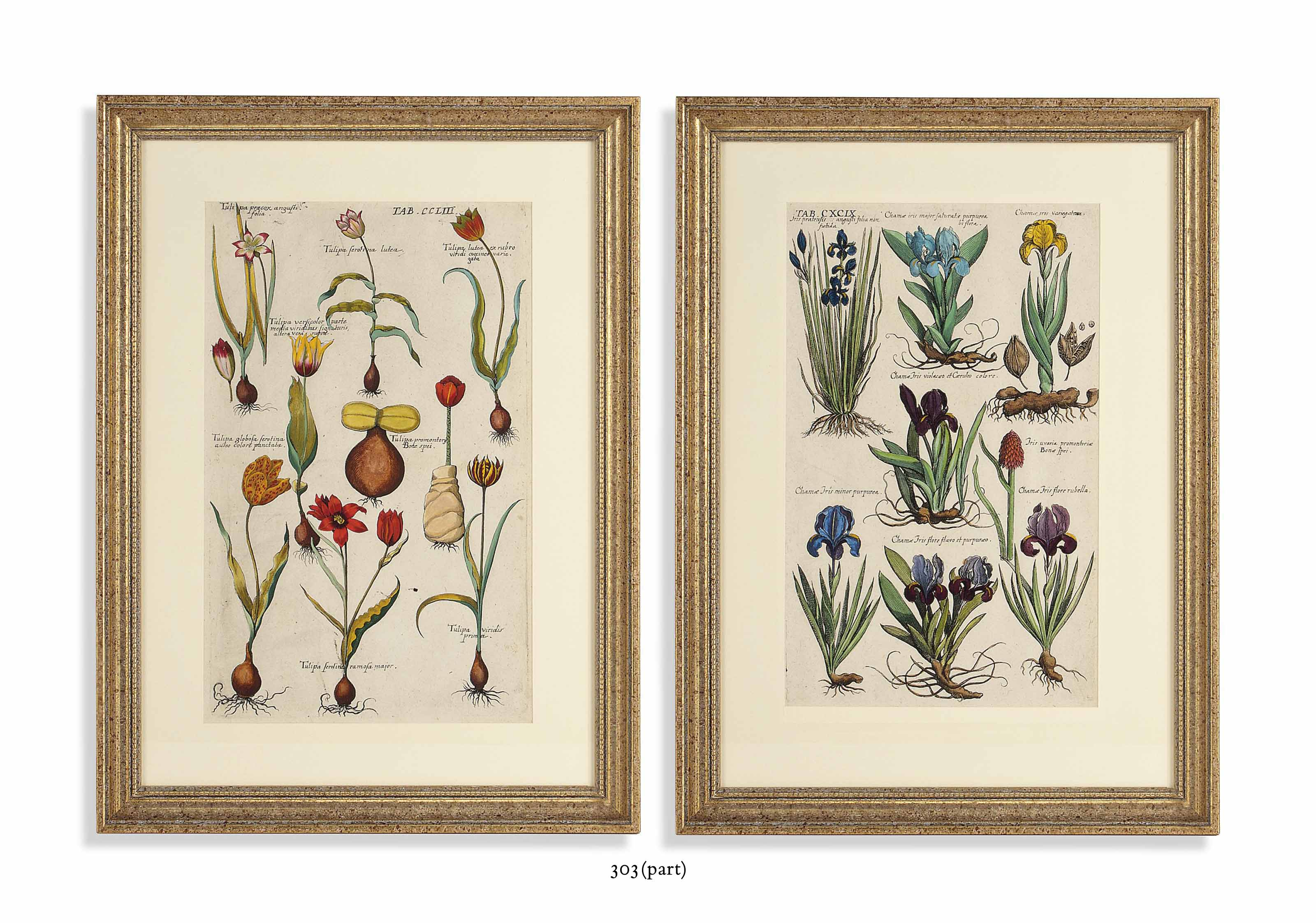 ELEVEN BOTANICAL ENGRAVINGS FROM THE BOOK FLORILEGIUM NOVUM