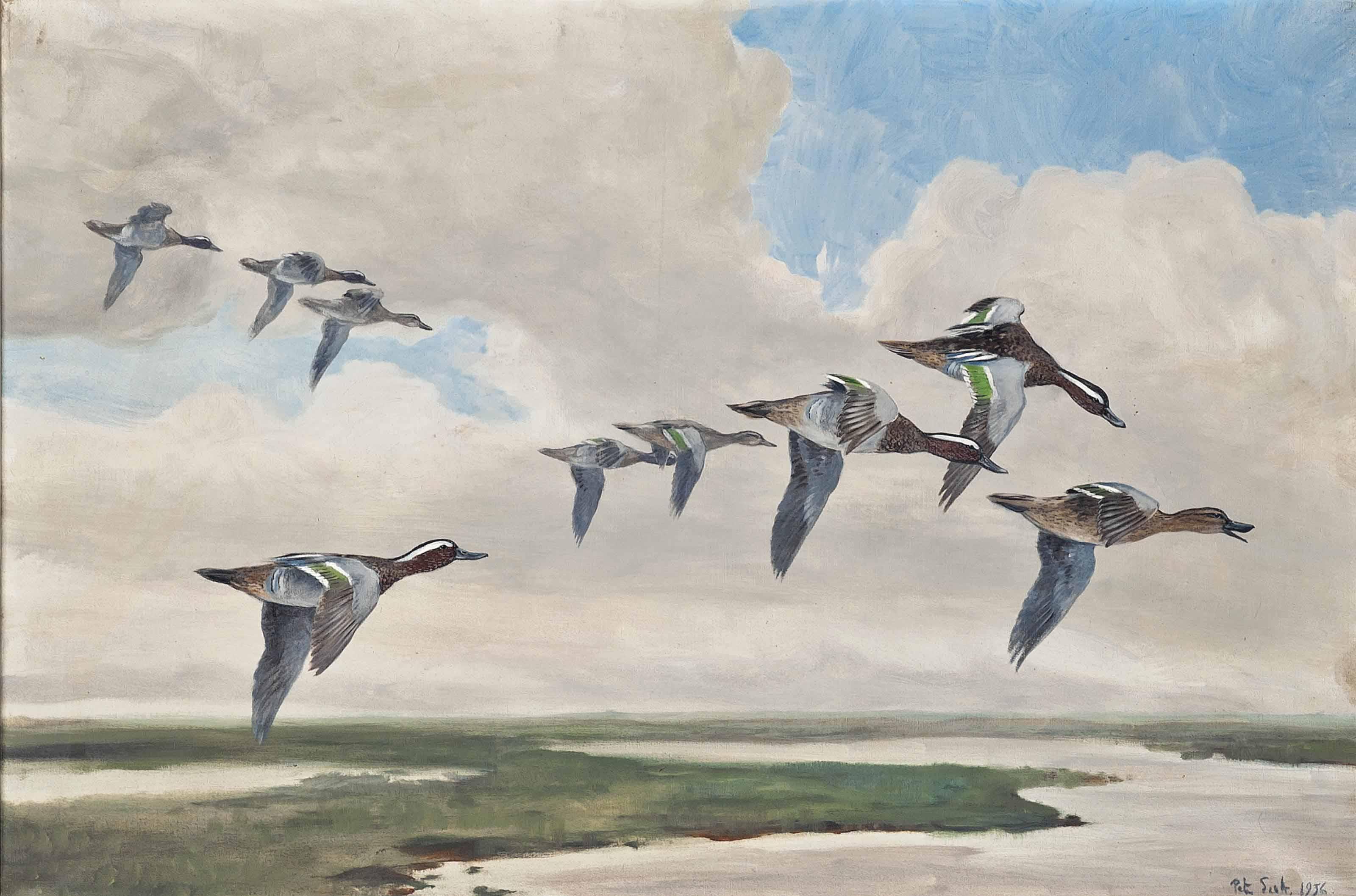 Garganey in flight