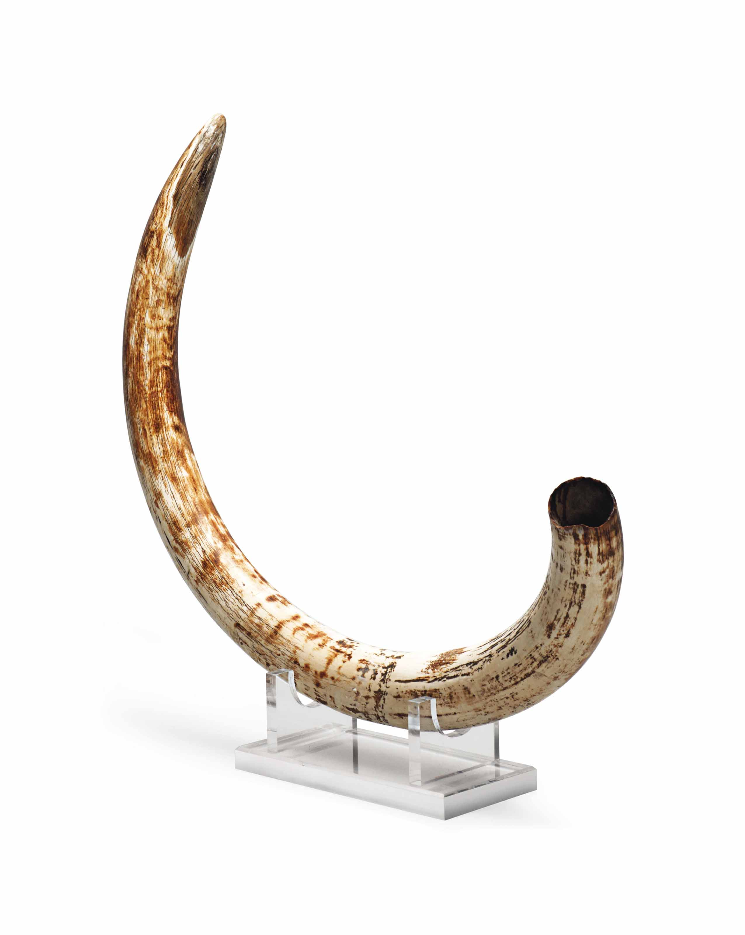 A DOUBLE-CURVED WOOOLY MAMMOTH