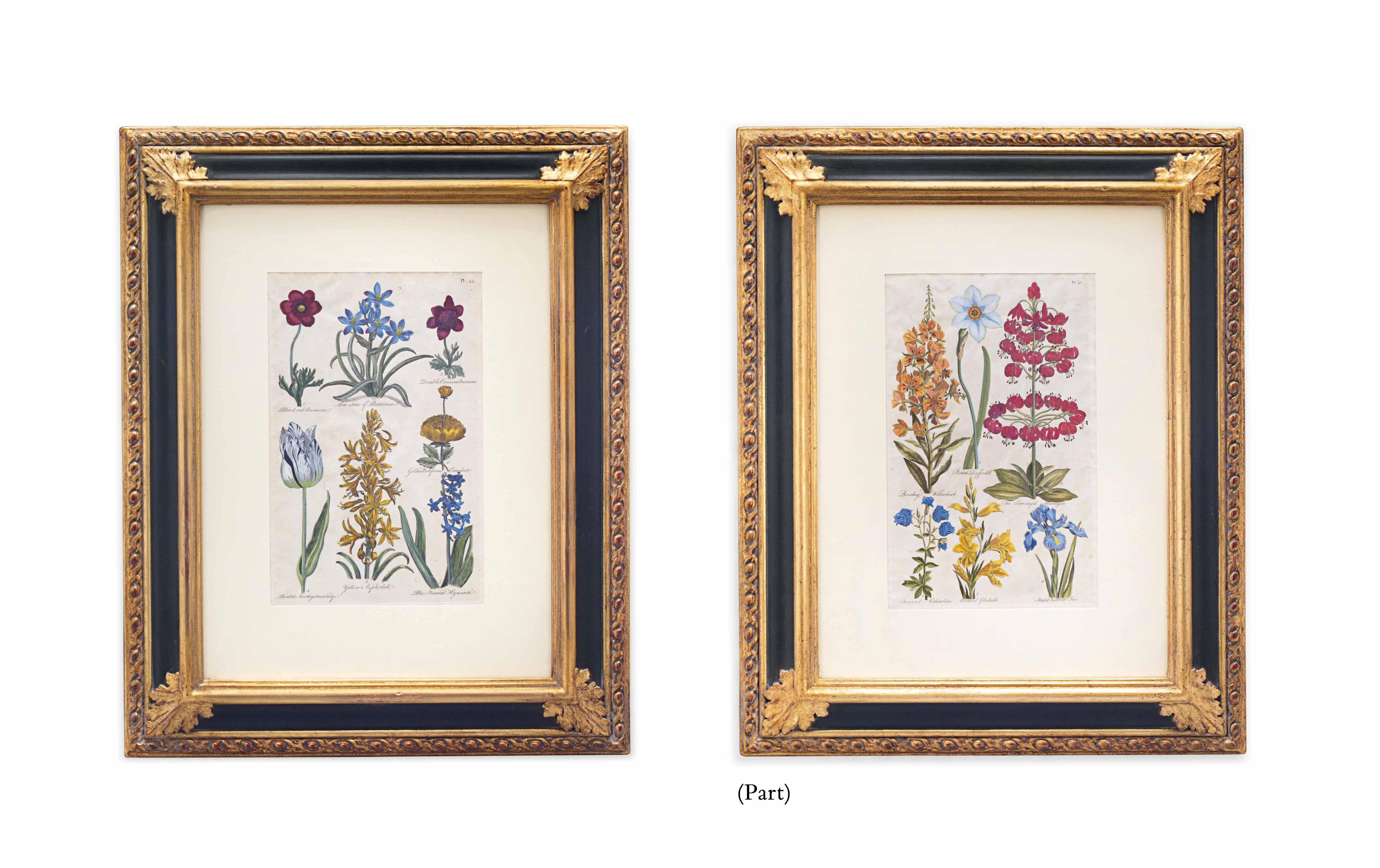 EIGHT BOTANICAL ENGRAVINGS OF FLOWERING PLANTS