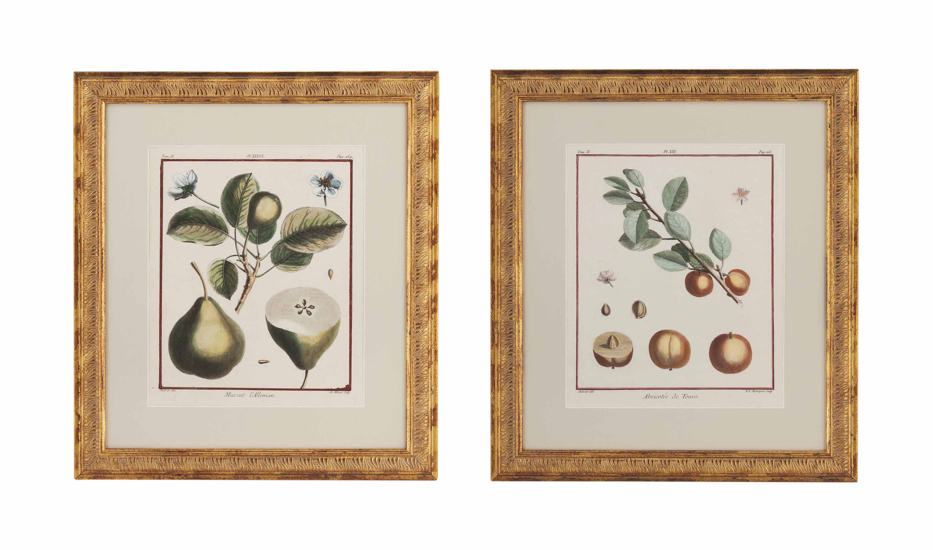 EIGHTEEN HAND COLOURED LITHOGRAPHS OF FRUIT