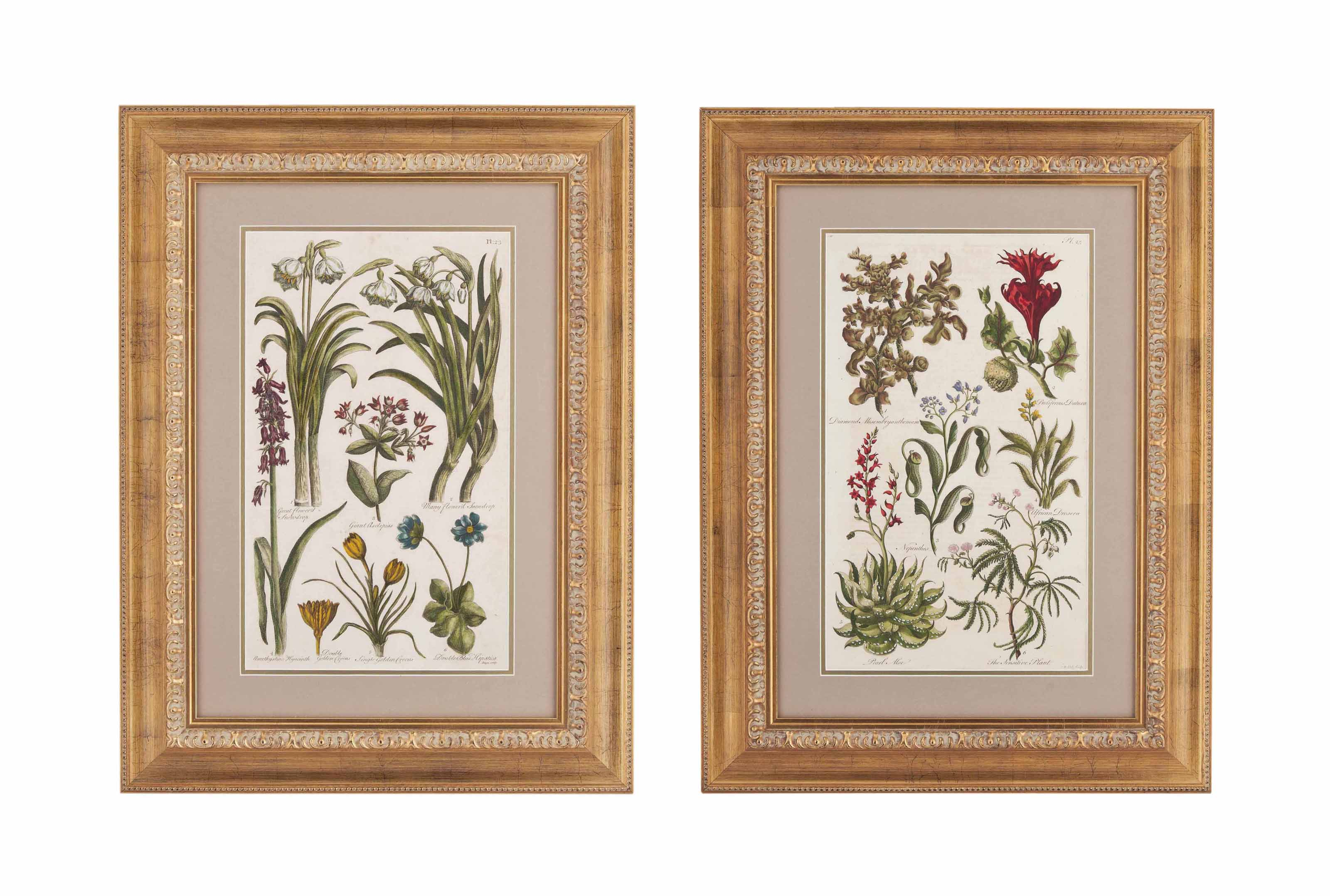 TEN PRINTS OF FLOWERING PLANTS