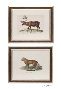 TWELVE HAND-COLOURED LITHOGRAPHS OF WILD ANIMALS