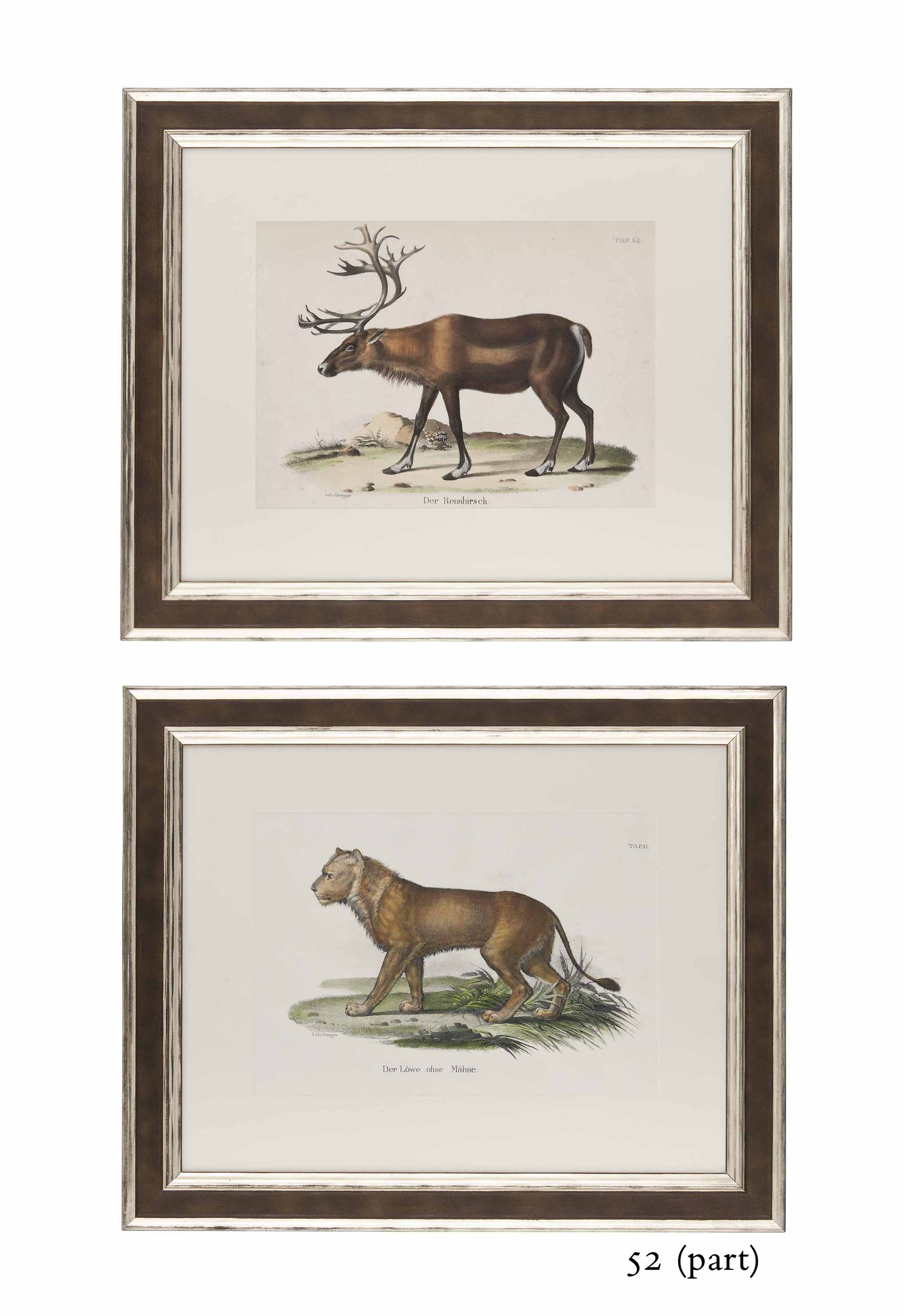 TWELVE HAND-COLOURED LITHOGRAPHS OF WILD ANIMALS