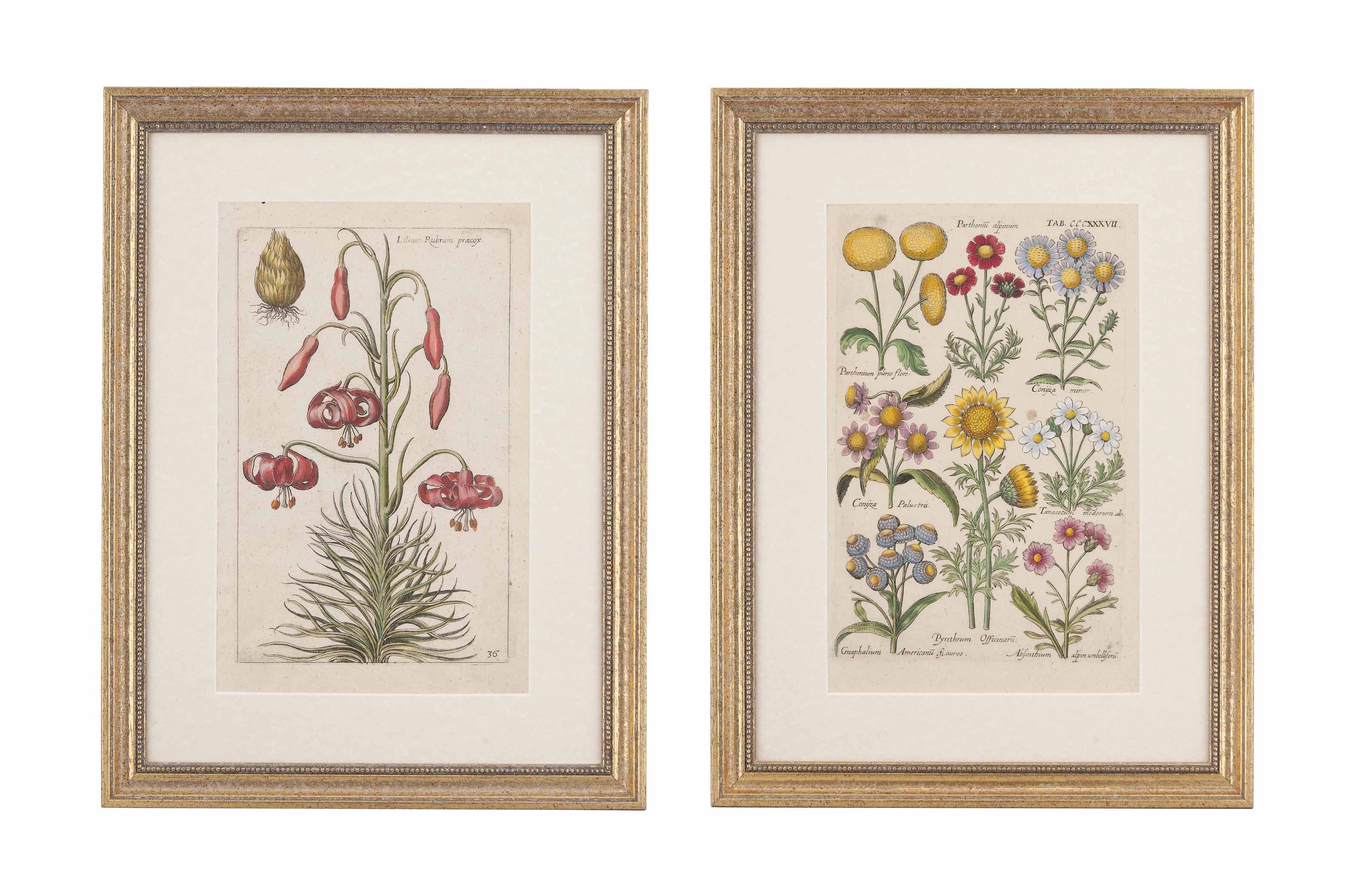 TWELVE BOTANICAL ENGRAVINGS FROM THE BOOK 'FLORILEGIUM NOVUM'