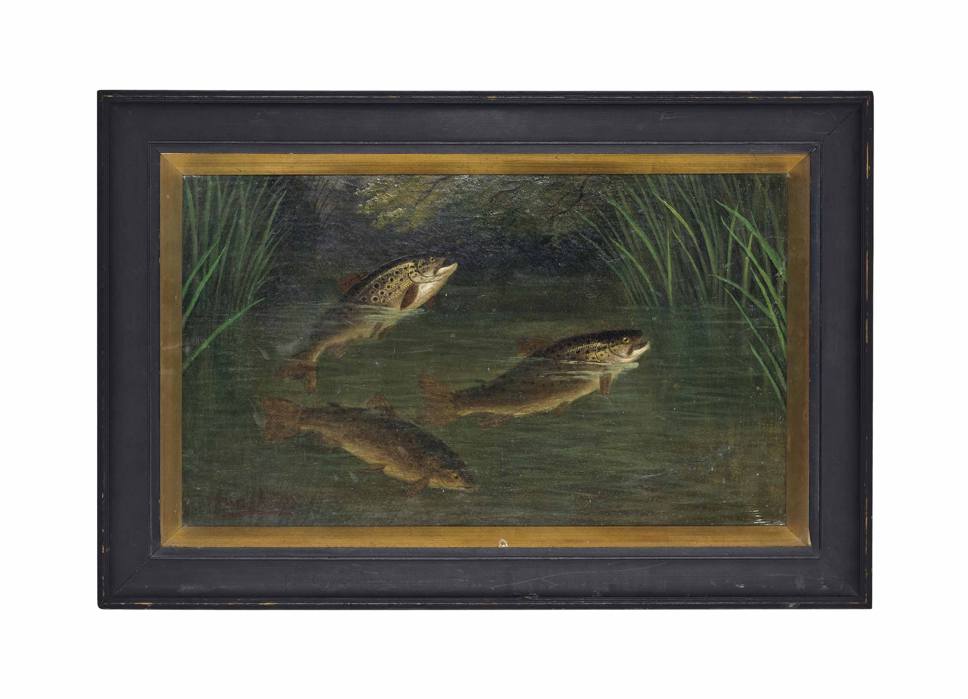 Trout in a river