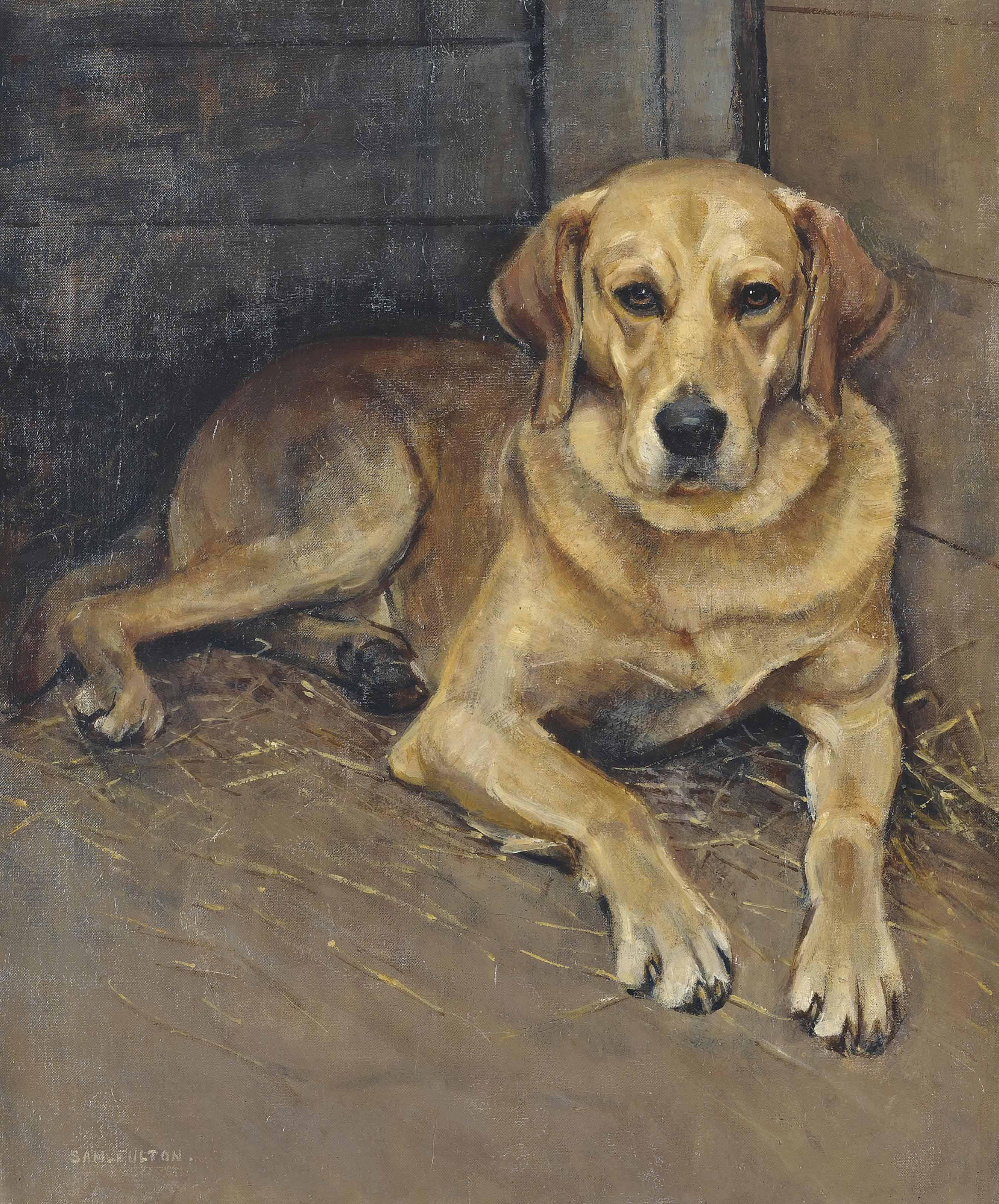 'Luath', the labrador