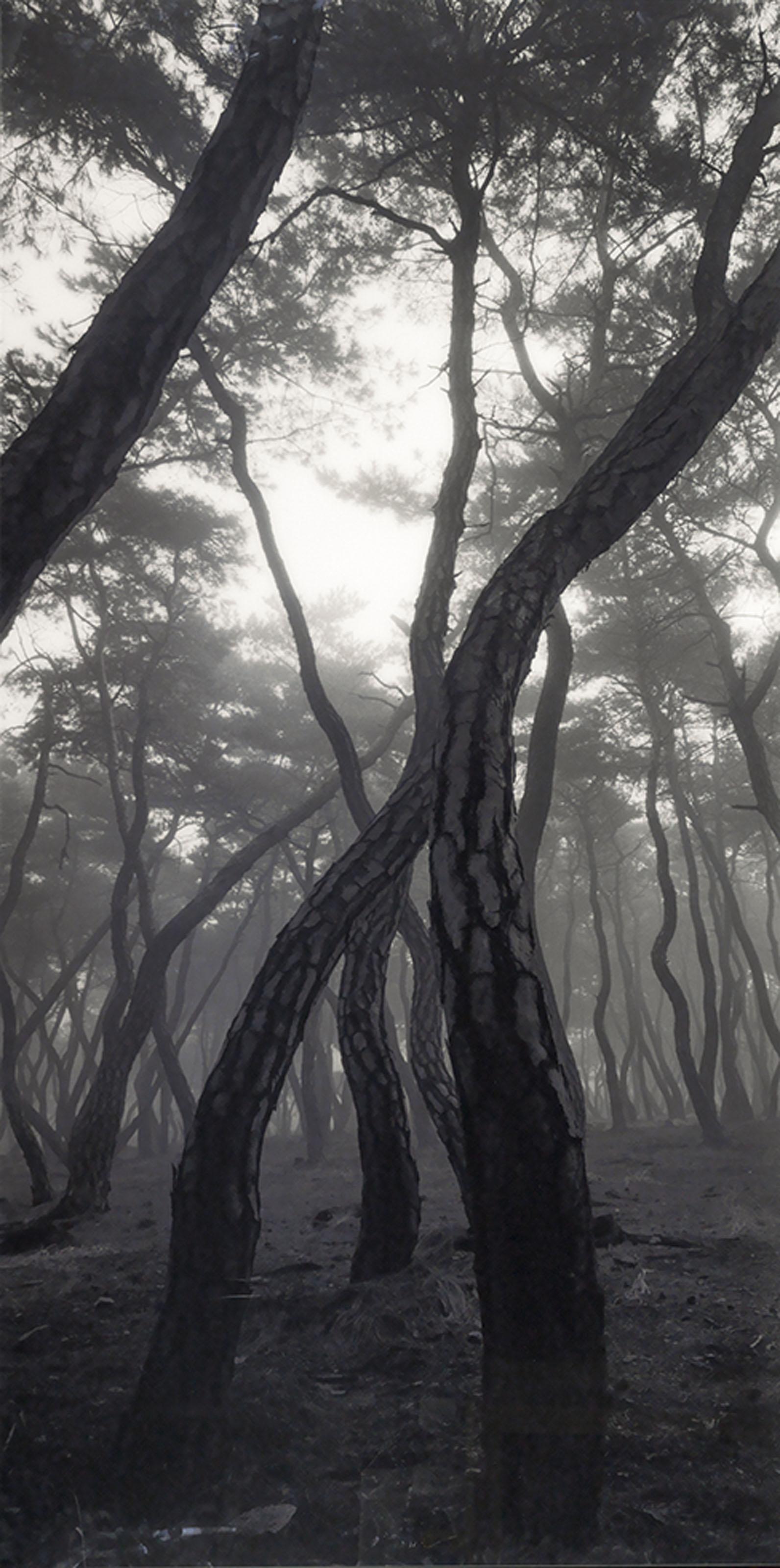Pine Tree Series - Sonamoo SNM/A 002V