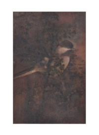 Untitled (Bird on Tree)