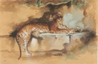 A tiger resting on a ledge
