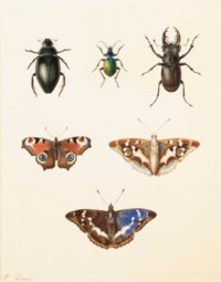 Three beetles and three butterfies: a ground beetle, a Calosoma sycophantis, and a cottonwood stag beetle; a peacock (Inachus io), and a Purple Emperor (Apatura iris, upper and under sides)