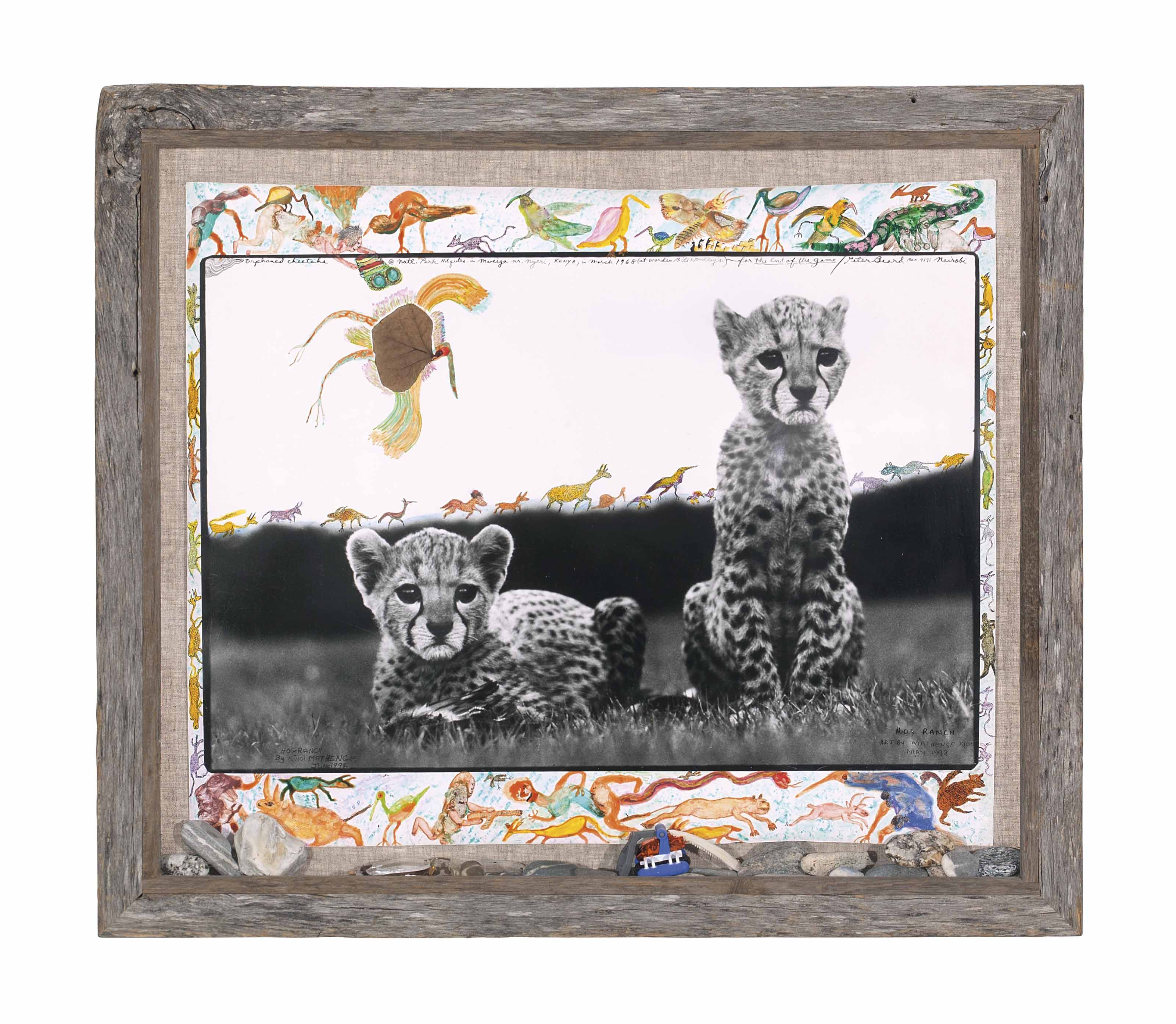 Orphaned Cheetahs, Kenya, from 'The End of the Game,' 1968