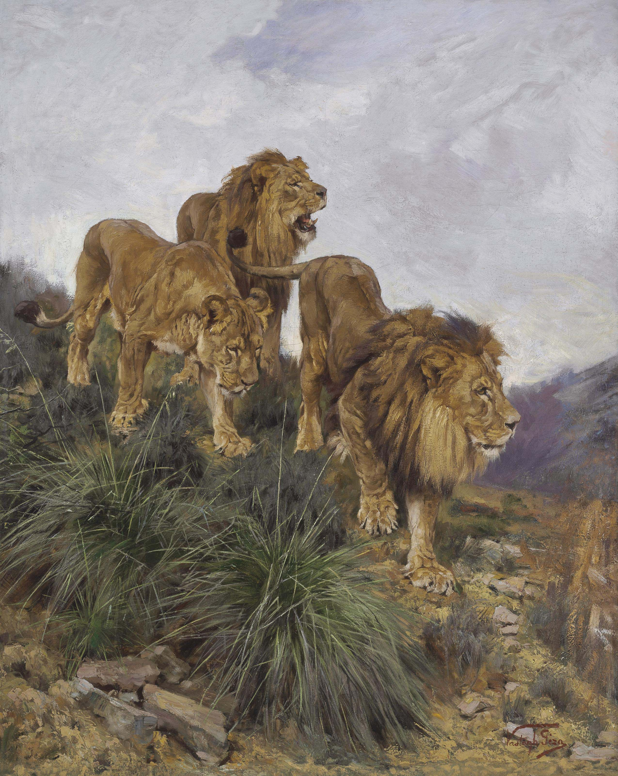 Three Lions Walking Down a Rocky Hillside