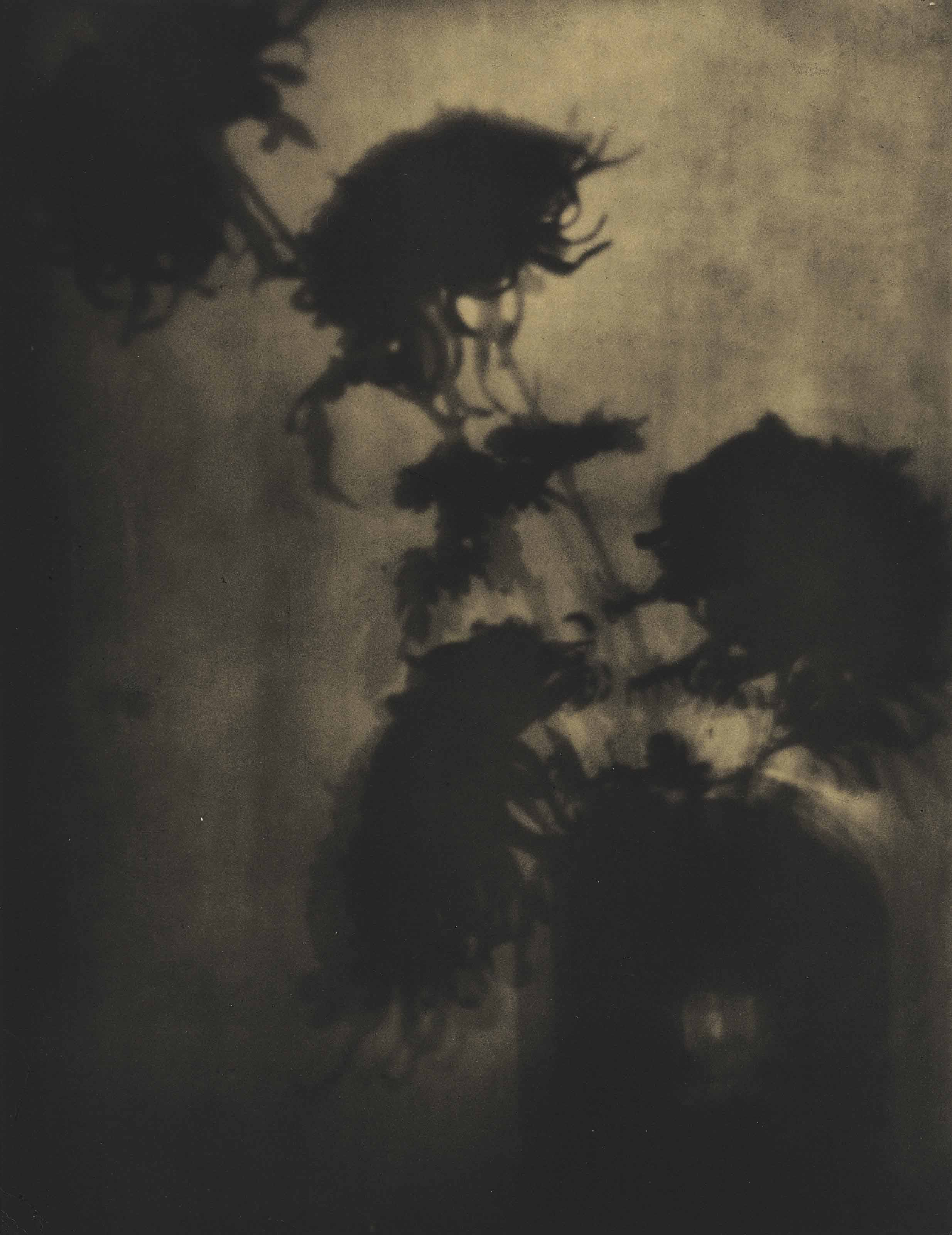 The Shadows on the Wall, Chrysanthemums, c. 1907