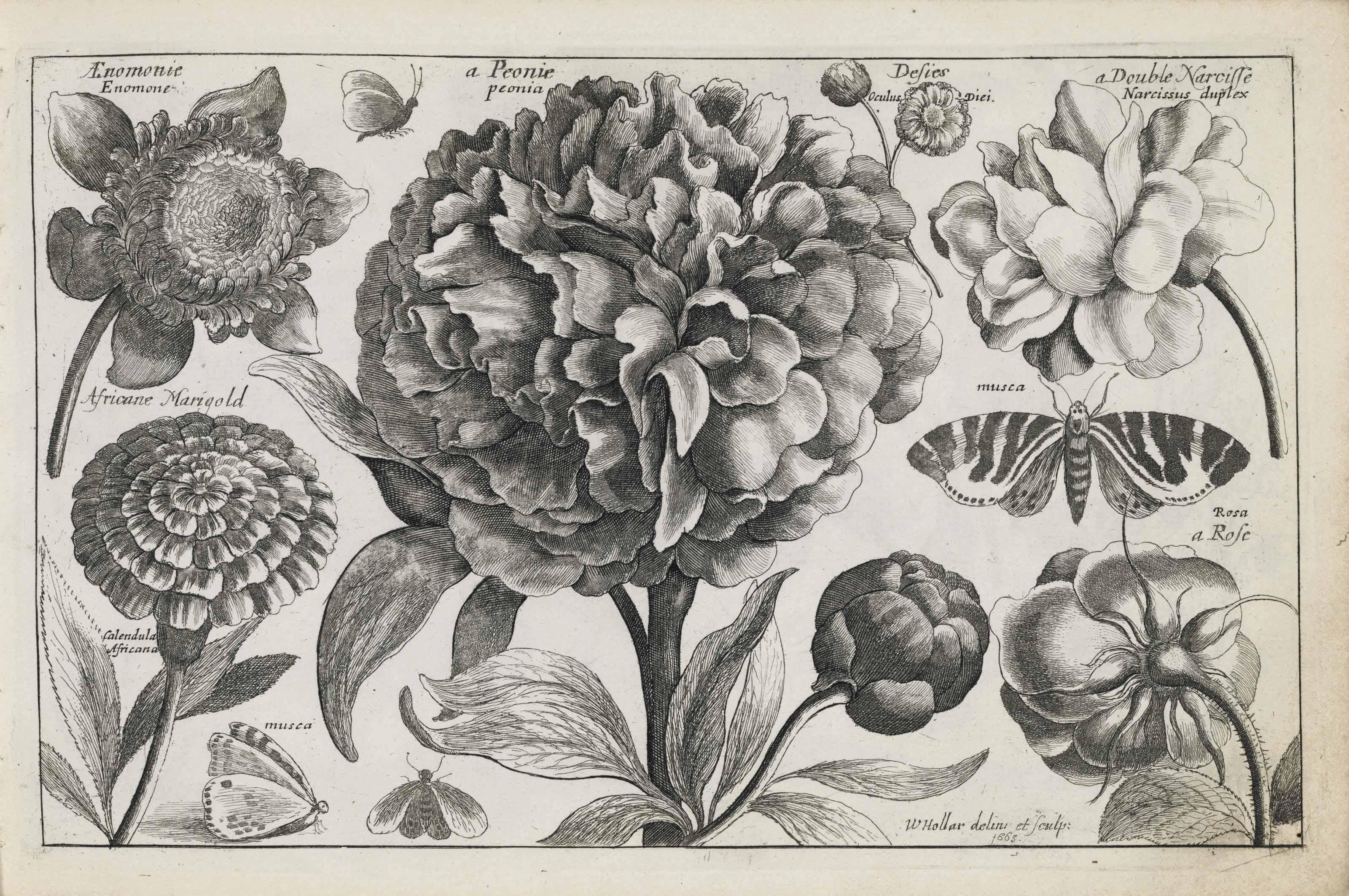 HOLLAR, Wenceslaus (1607-1677)