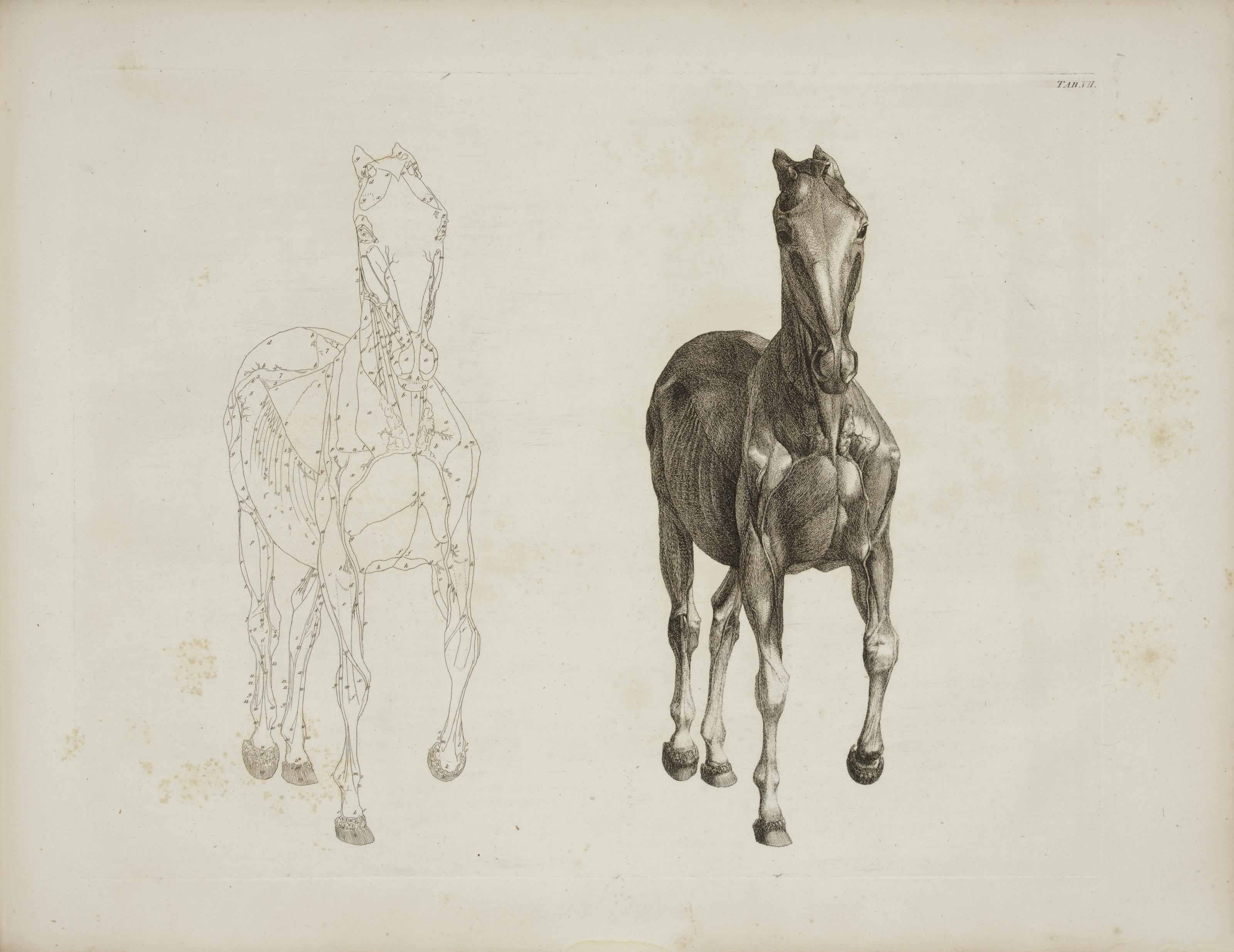 Stubbs George 1724 1806 The Anatomy Of The Horse London J