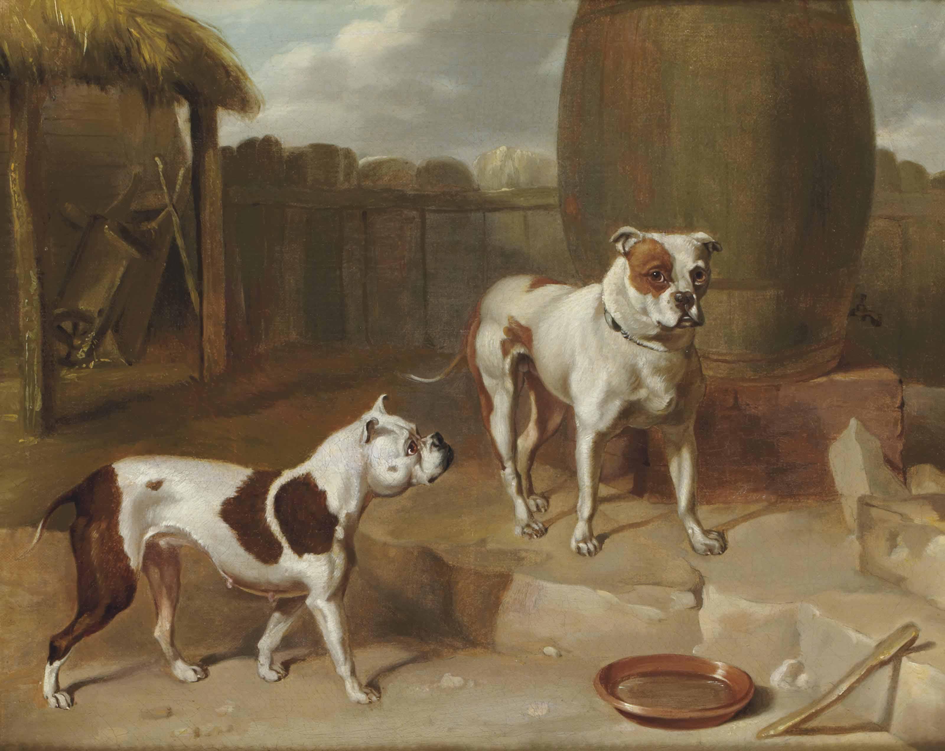 Deux chiens dans une cour