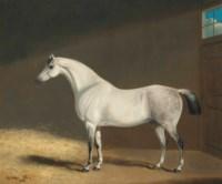 Cheval blanc dans une étable
