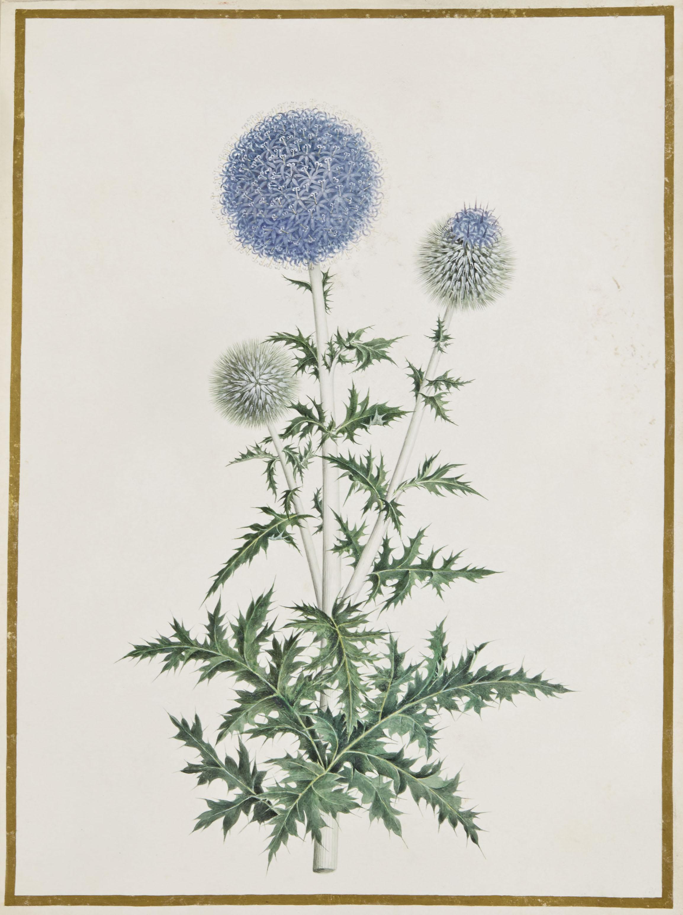 Branche de chardon (Carduus)