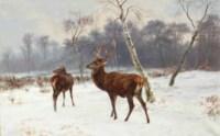 Cerf et biche dans un paysage enneigé