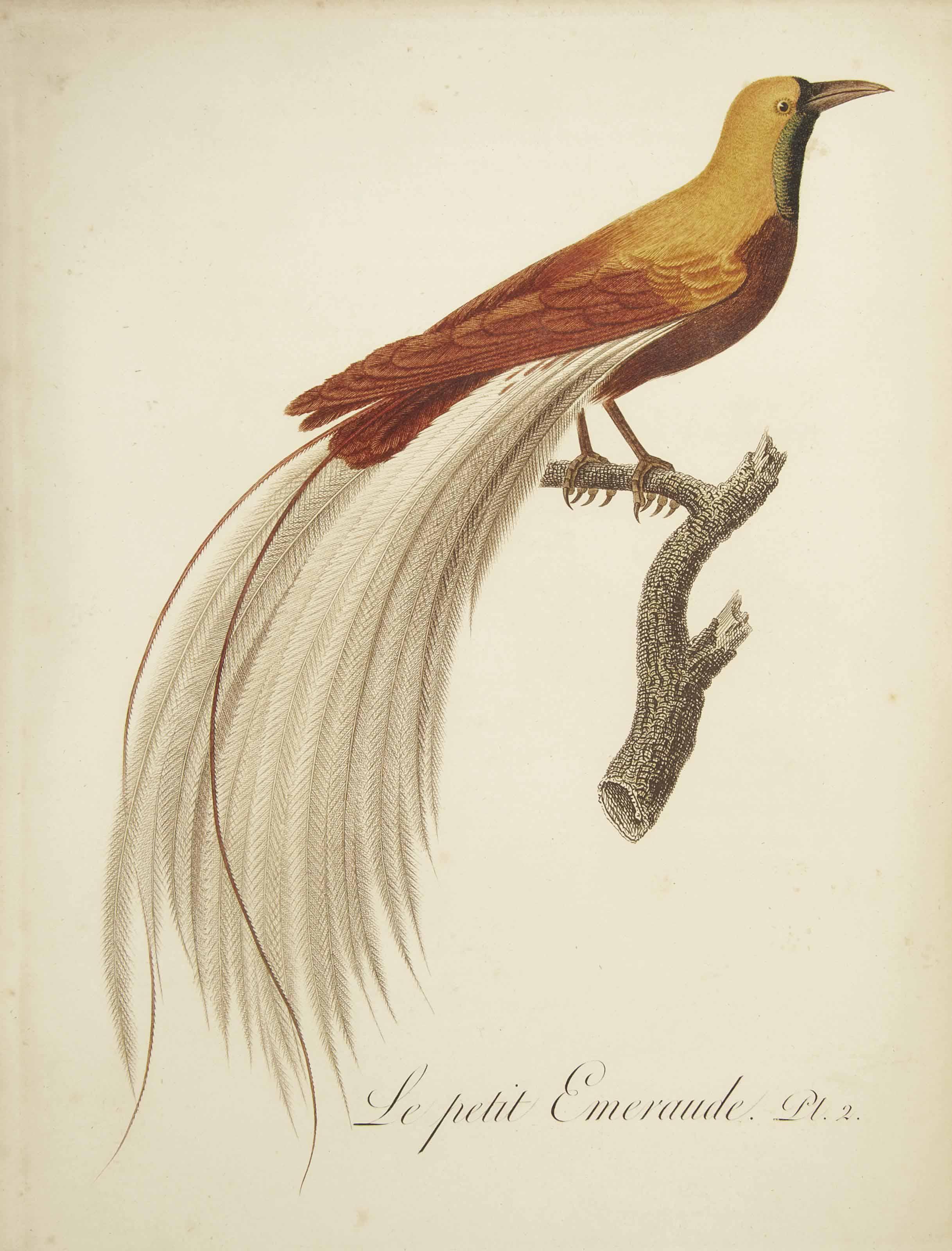 AUDEBERT, Jean-Baptiste (1759-1800) & Louis-Jean-Pierre VIEILLOT (1748-1831). Oiseaux dorés ou à reflets métalliques. I: Histoire naturelle et générale des Colibris, oiseaux-mouches, Jacamars et Promerops. II: ...des Grimpereaux et des oiseaux de paradis. Paris: Crapelet pour Desray, An XI=1802.
