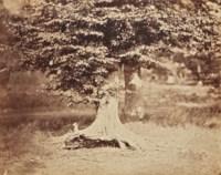 Fontainebleau, le hêtre, vers 1855-1857