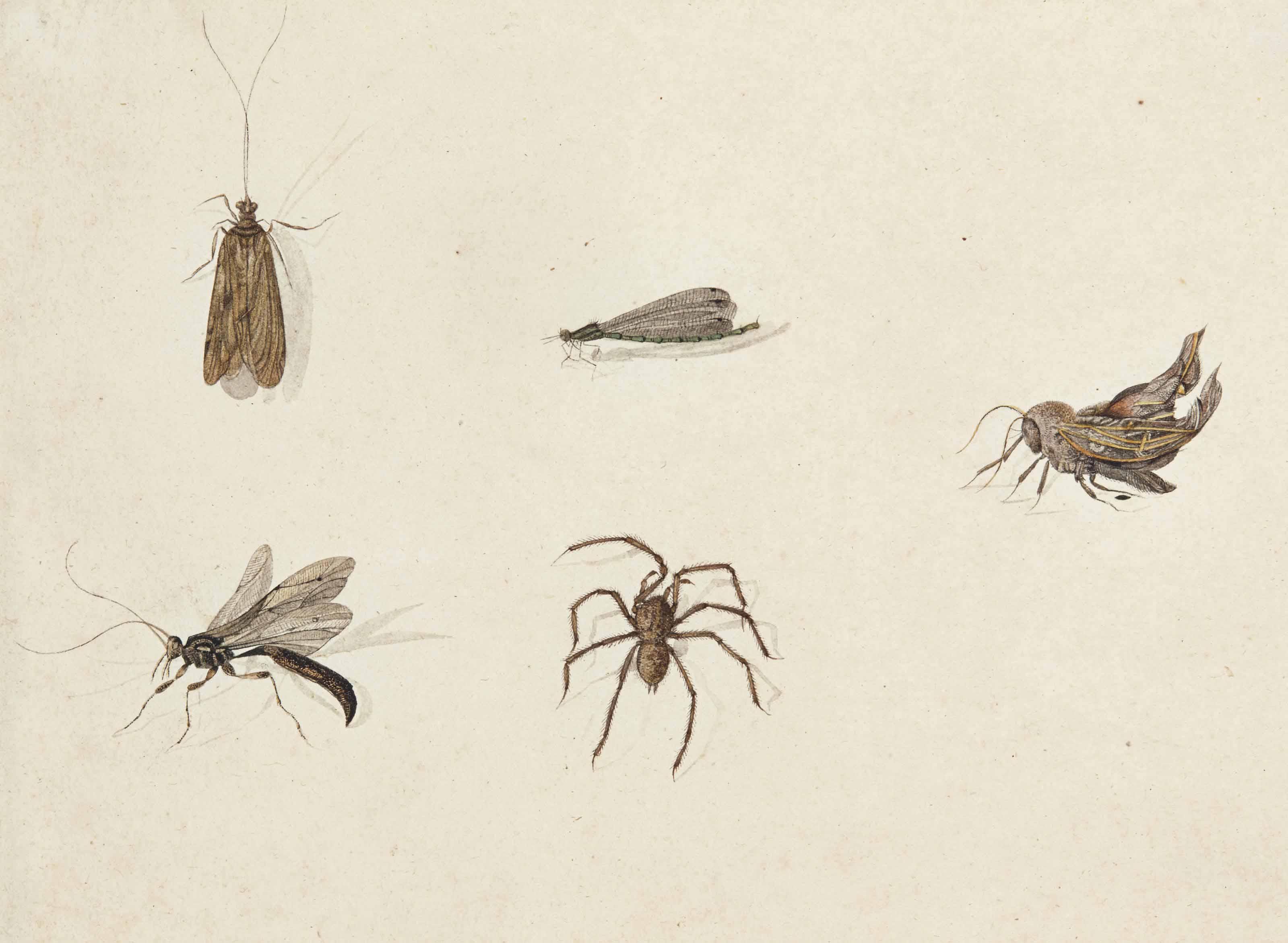Cinq insectes dont une araignée et une libellule