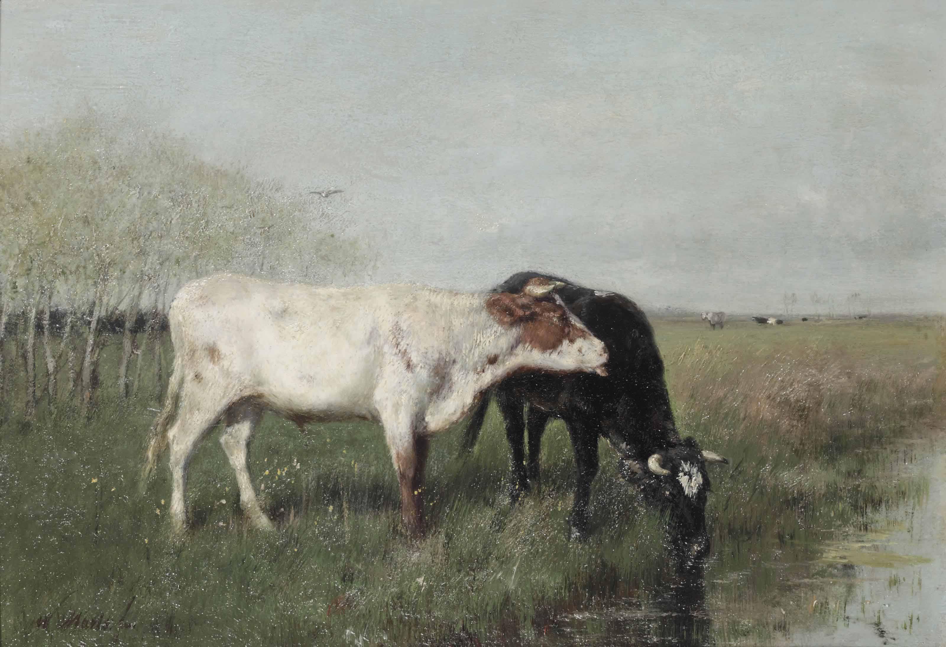 Koeien in de weide: cows in a meadow