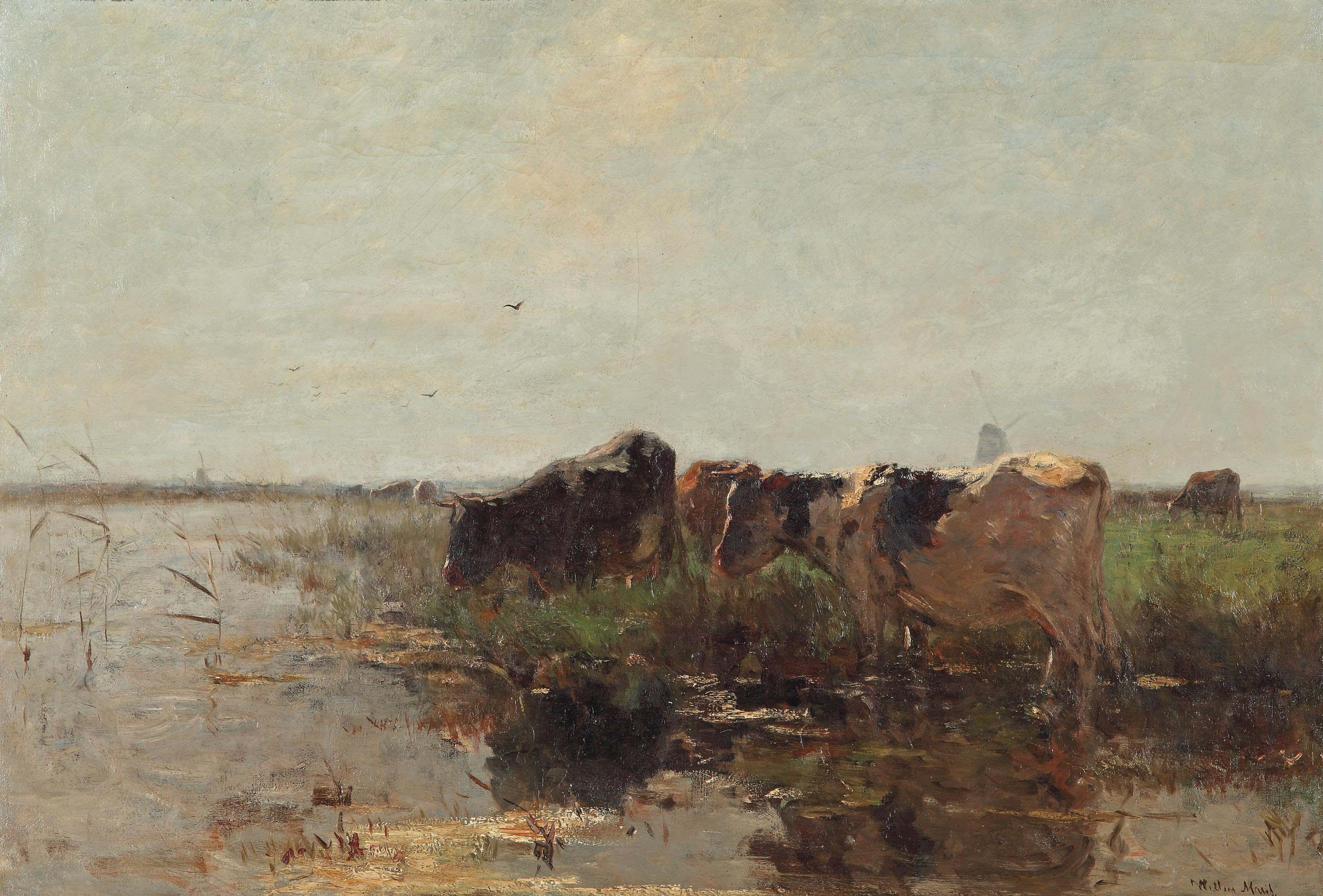 Cows grazing near a stream