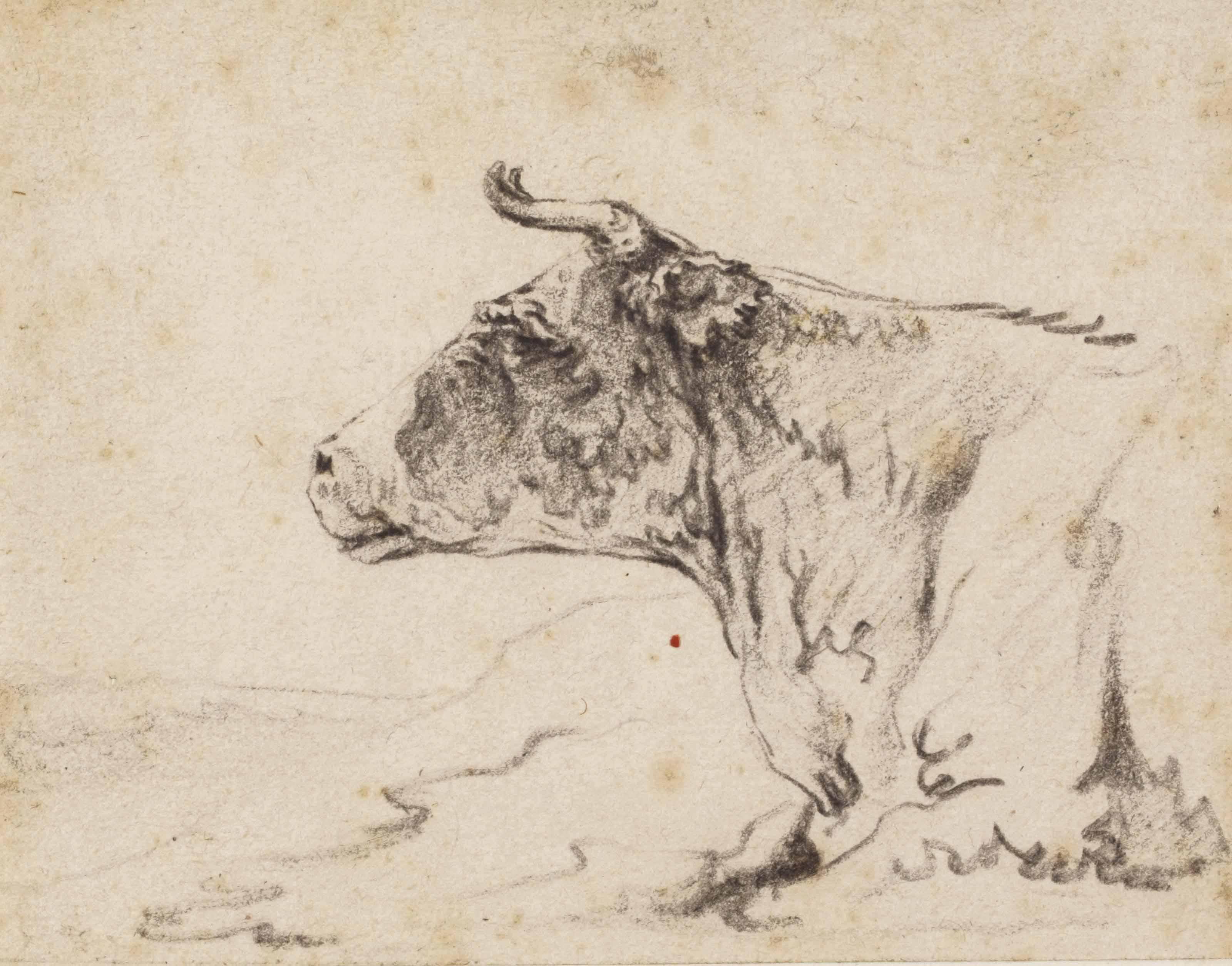 A recumbent cow