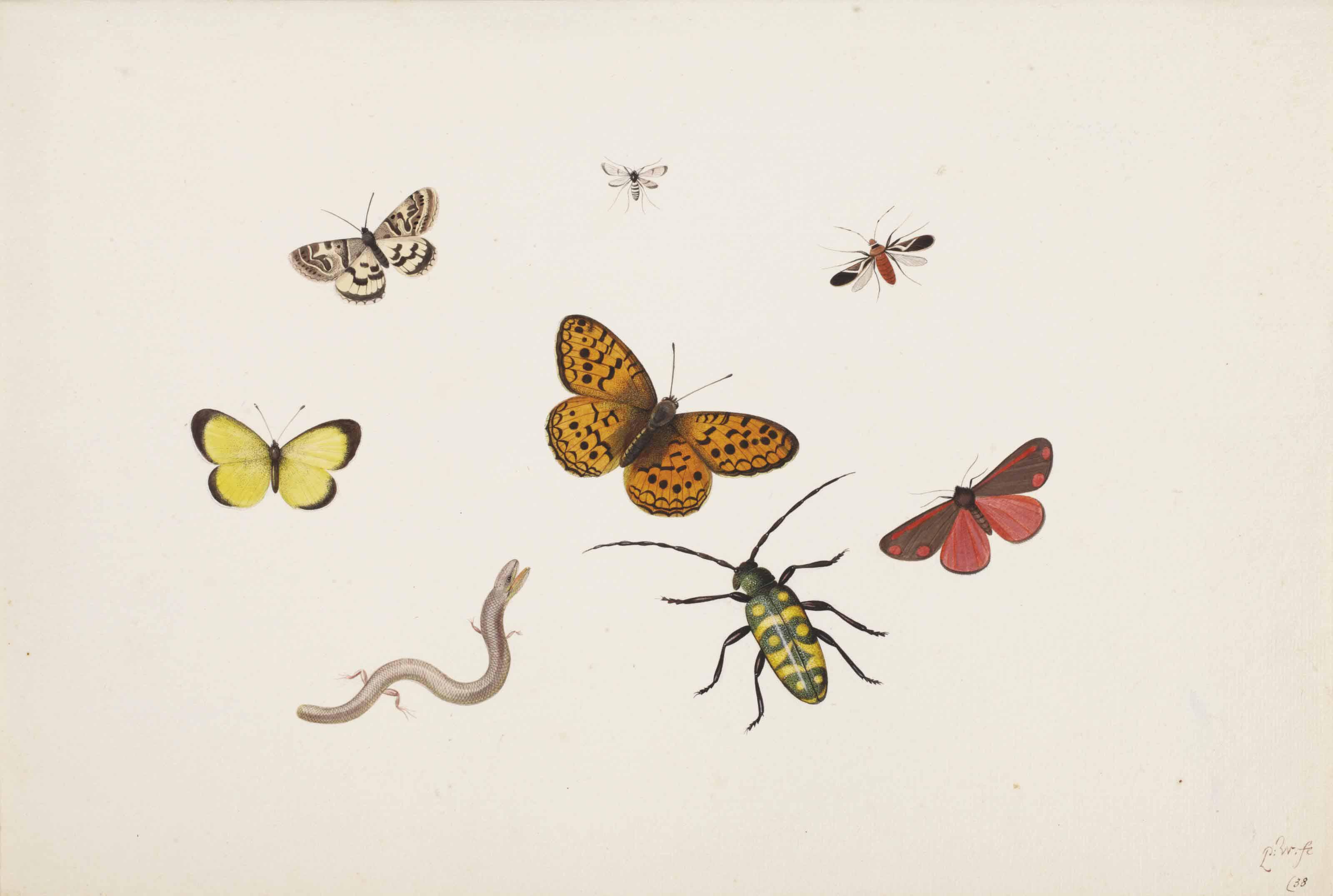 Studies of butterflies, moths, flies, a beetle and a slowworm