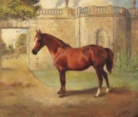 Miss Mary, a chestnut hunter at Badminton