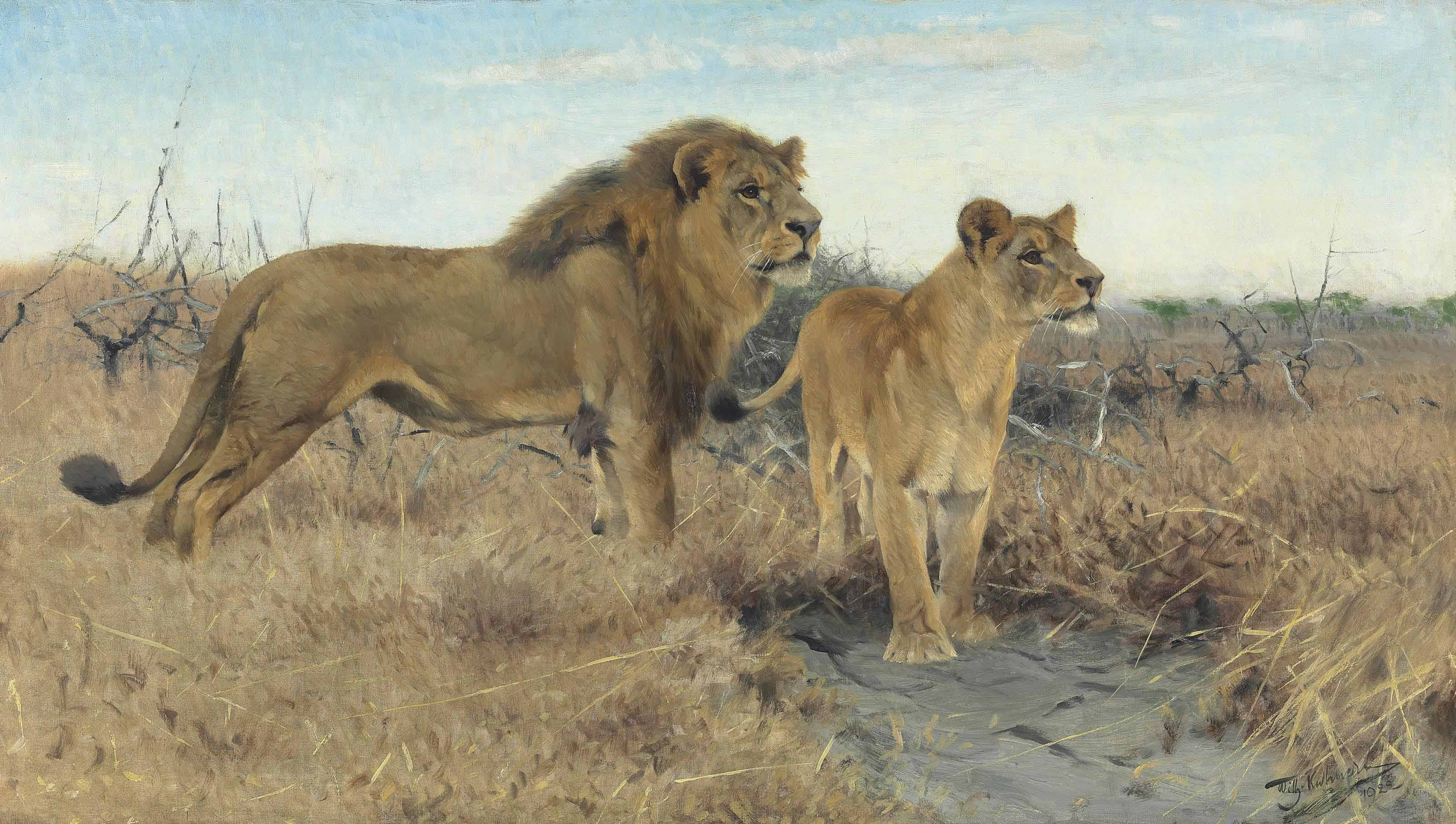 Lions on the plains of Africa