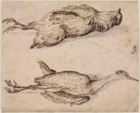 A partridge and a squacco heron