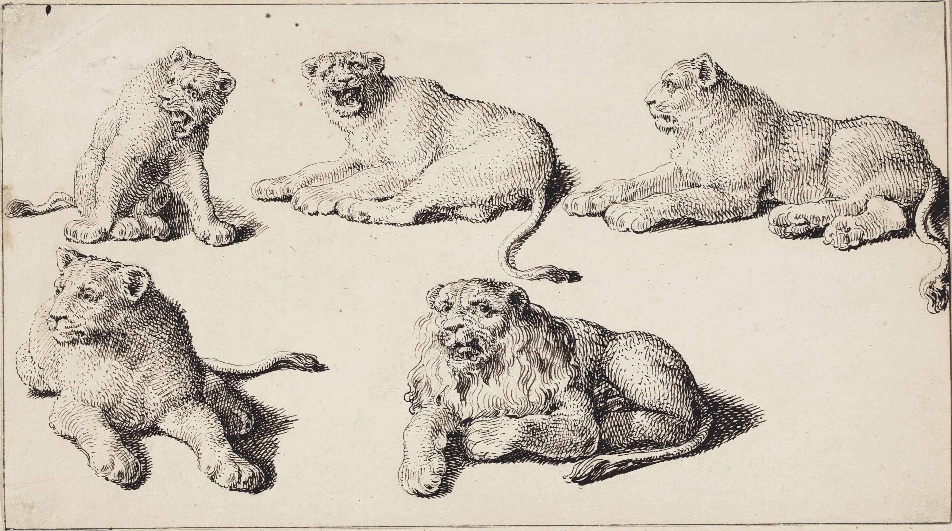 Five studies of lion cubs