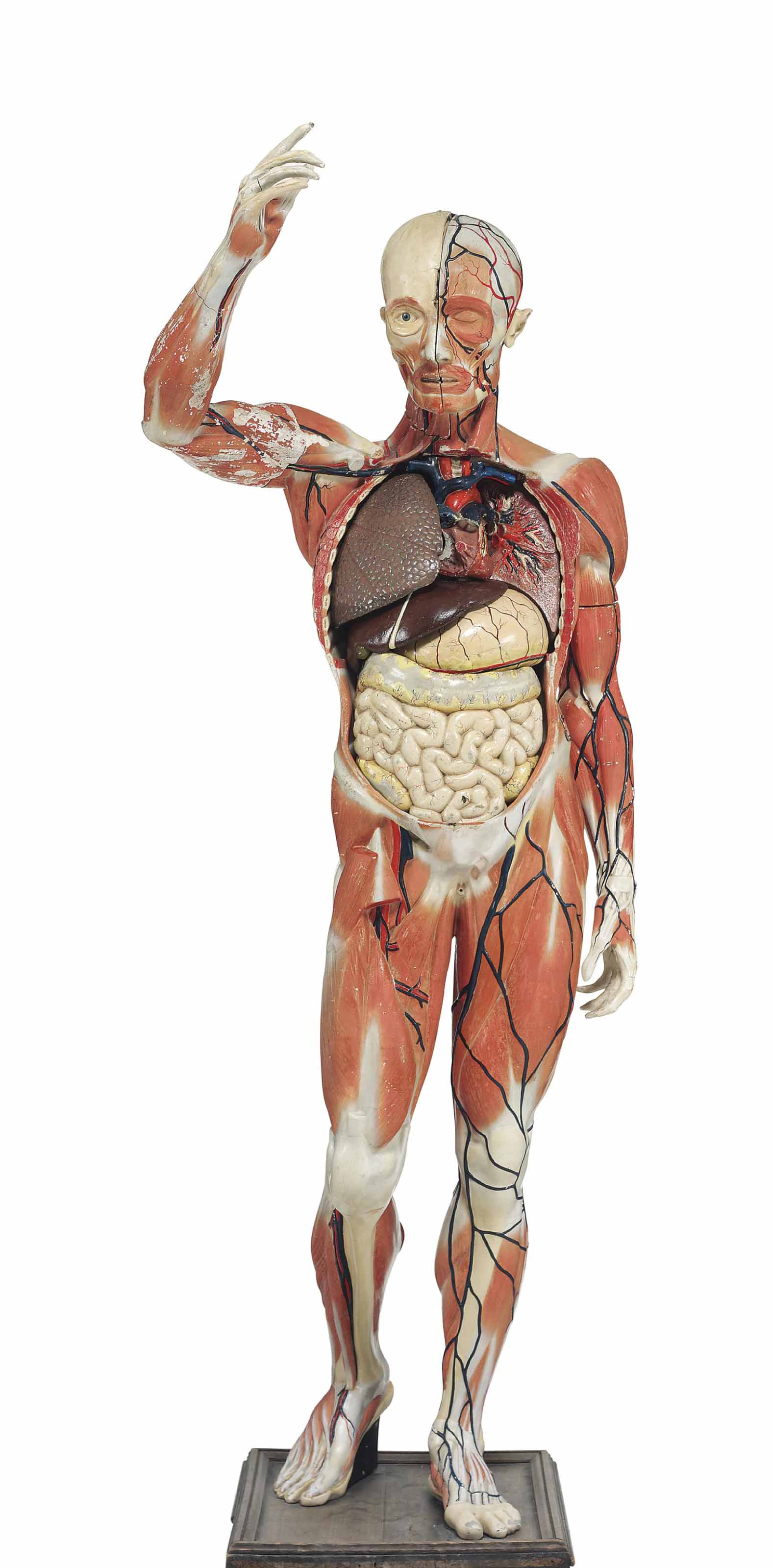A French Polychrome Plaster Anatomical Model Of The Human Body