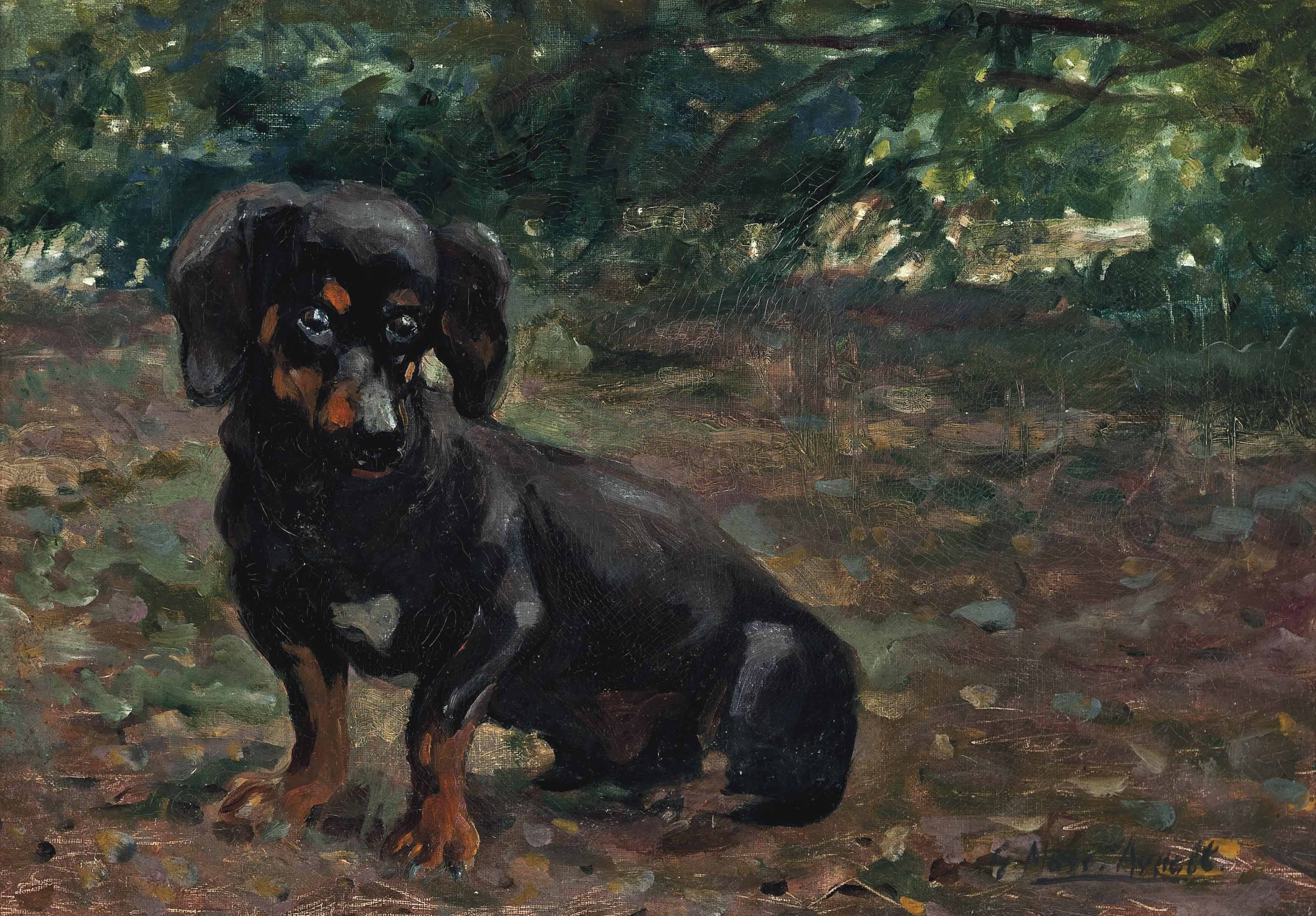 A Dachshund in a sunlit wood