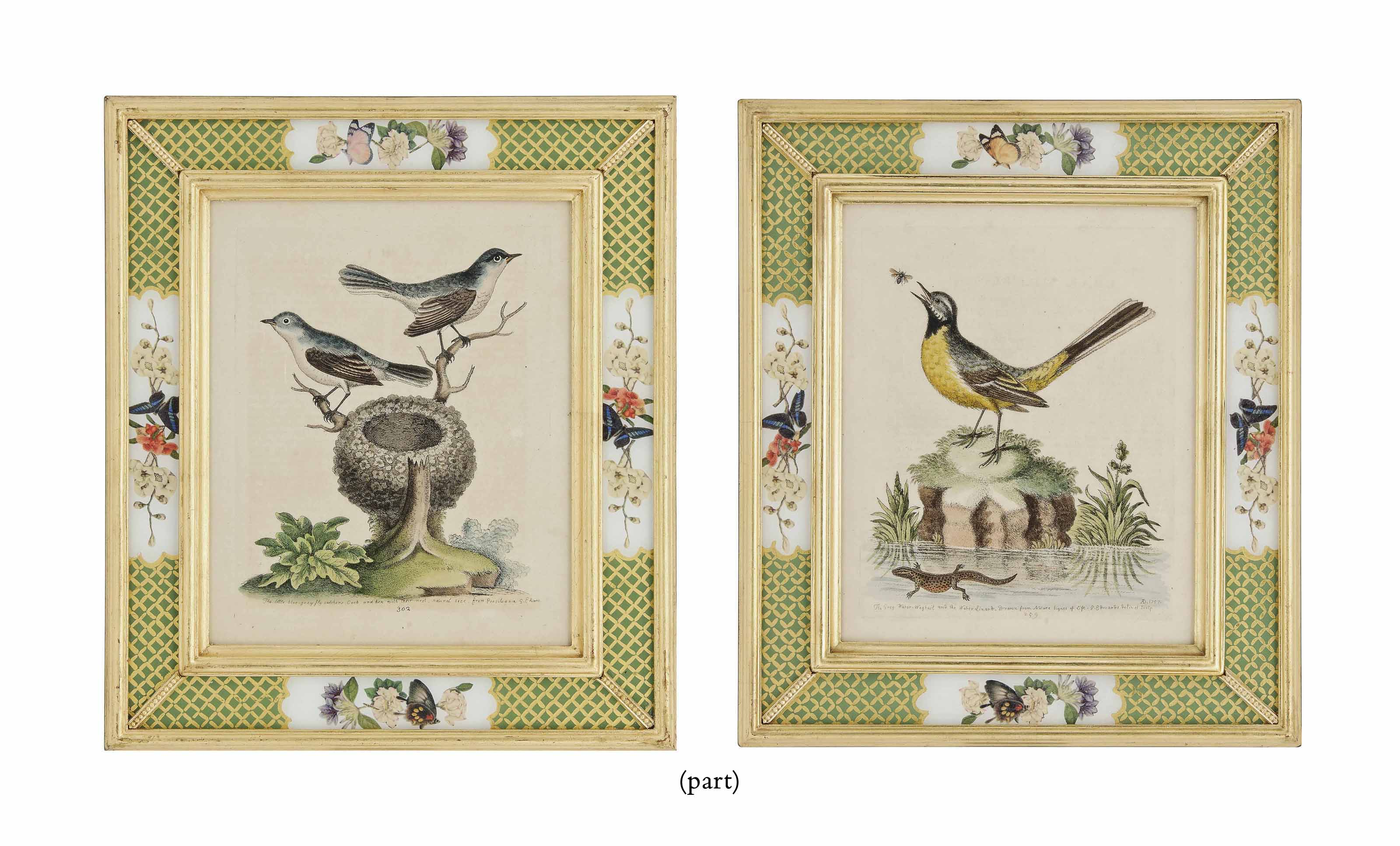 NINE HAND-COLOURED ENGRAVINGS OF BIRDS