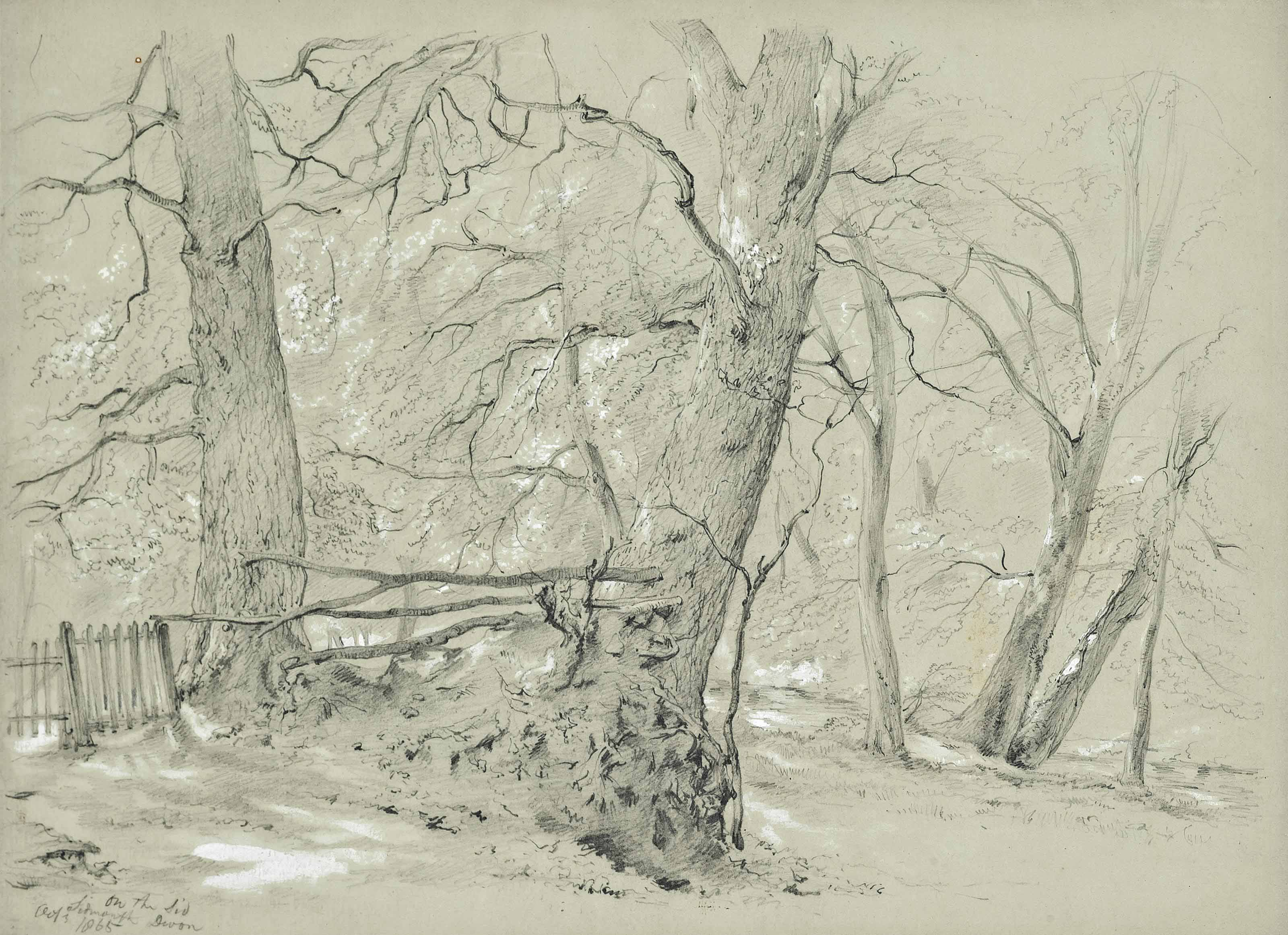 Study of trees, Sidmouth, Devon